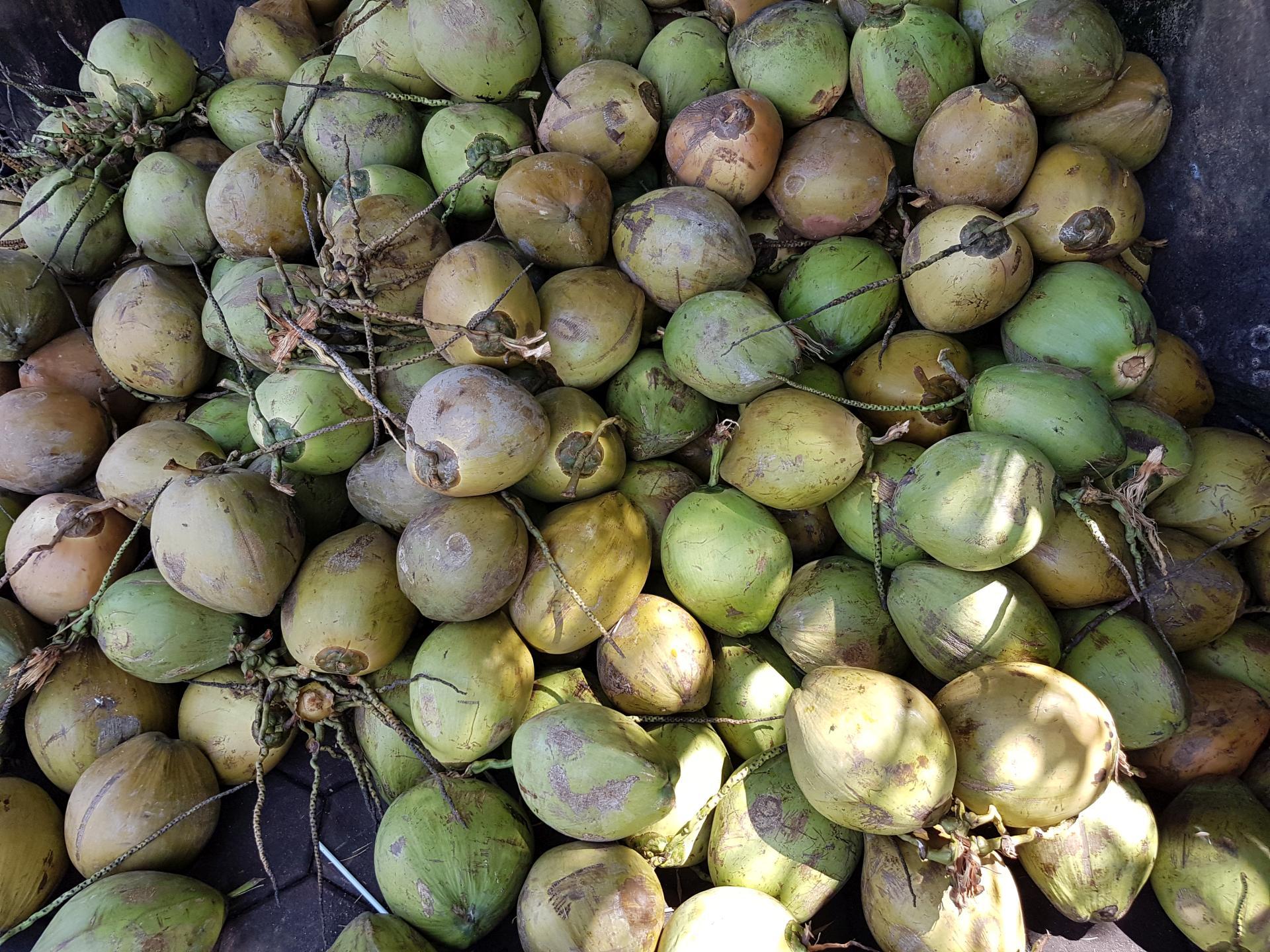 питьевые кокосы