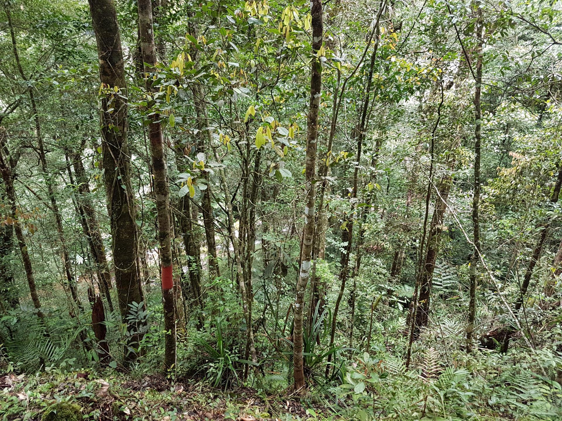 Джунгли Борнео