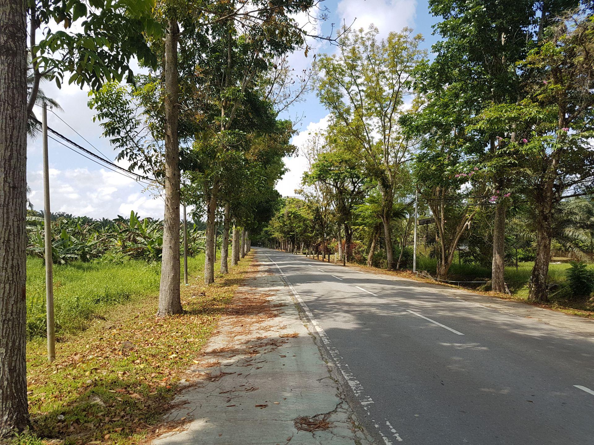 Дорога на Сепилок