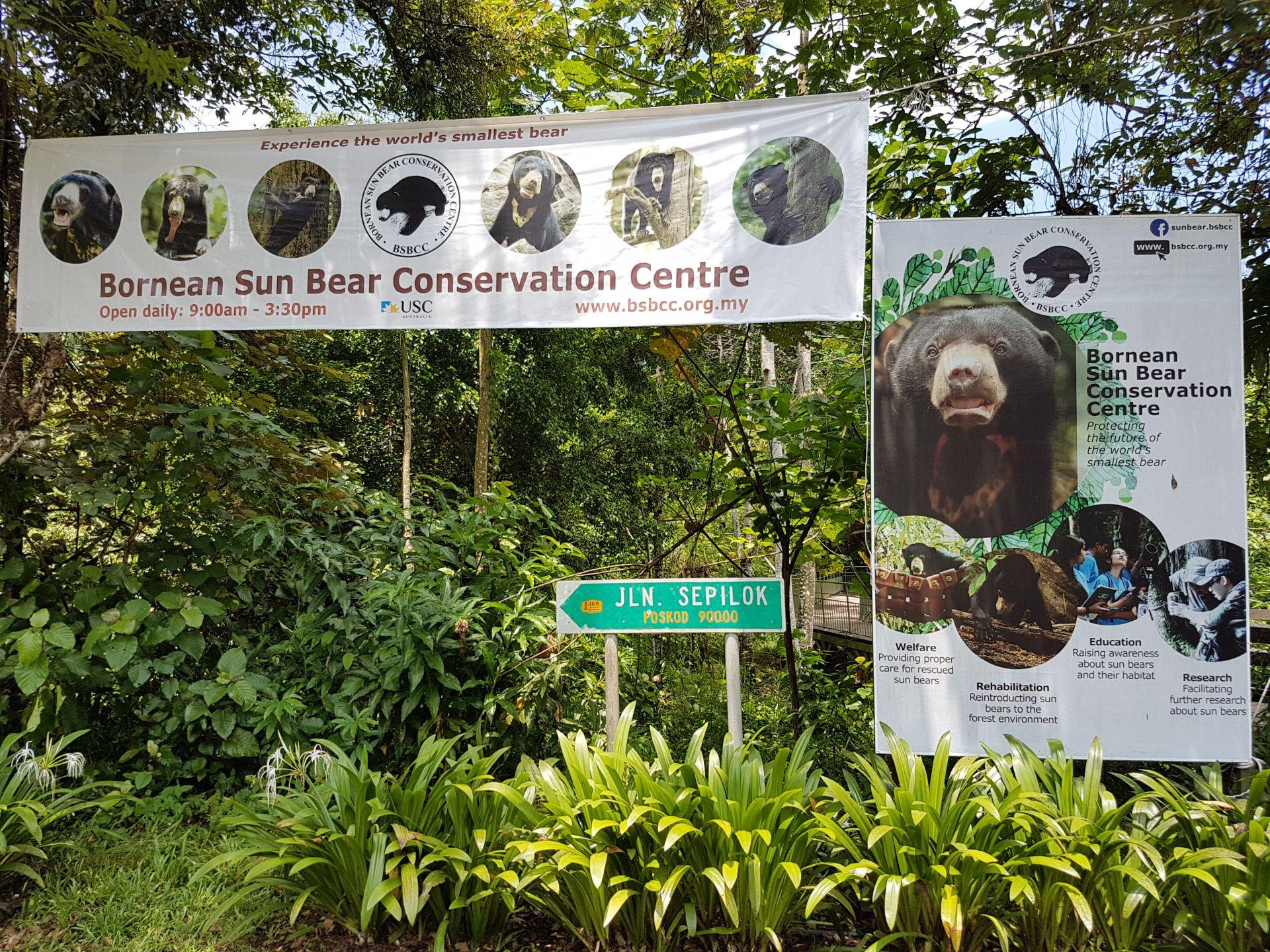 Солнечный медведь Борнео
