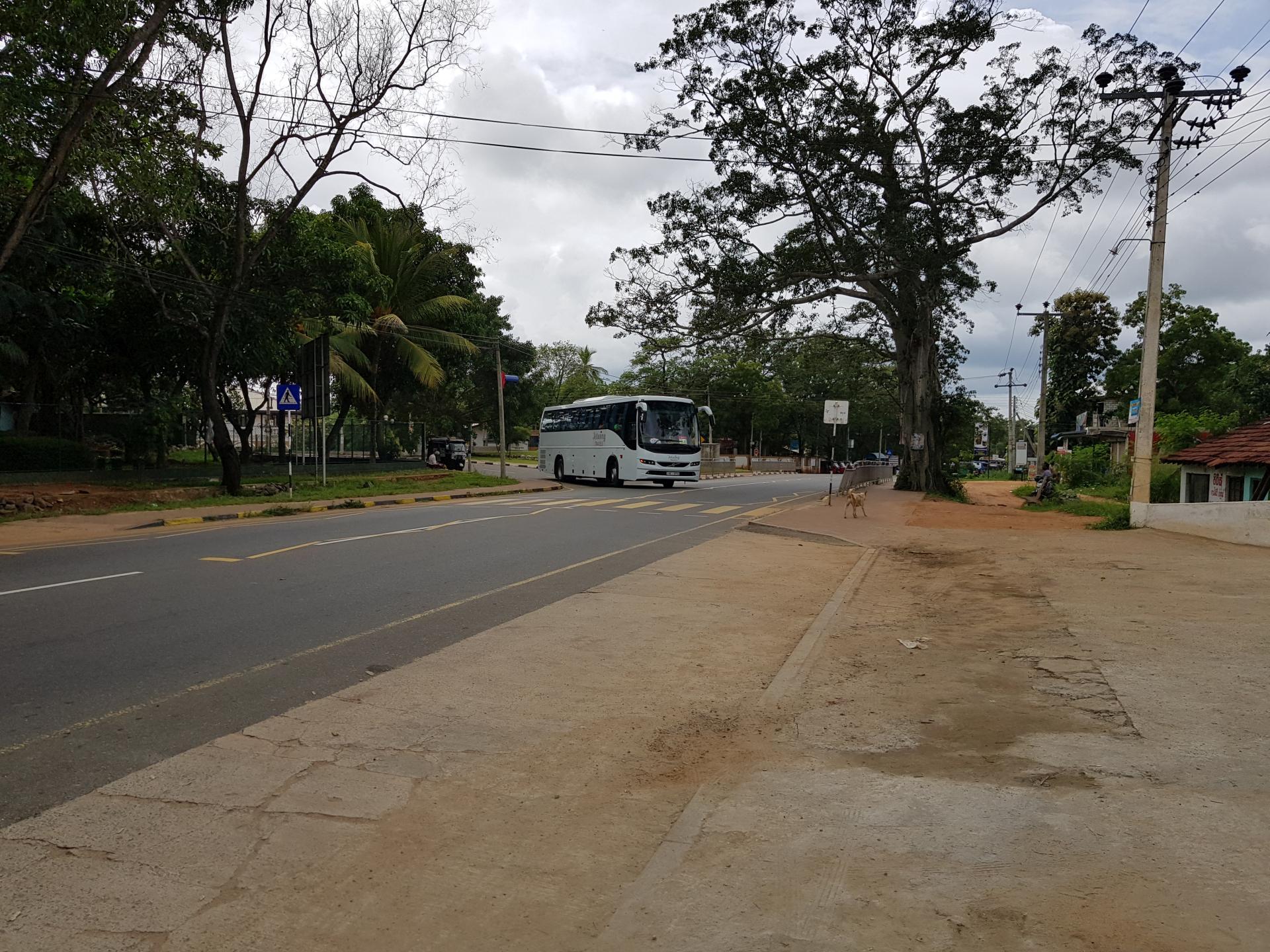 Дамбулла, Шри-Ланка