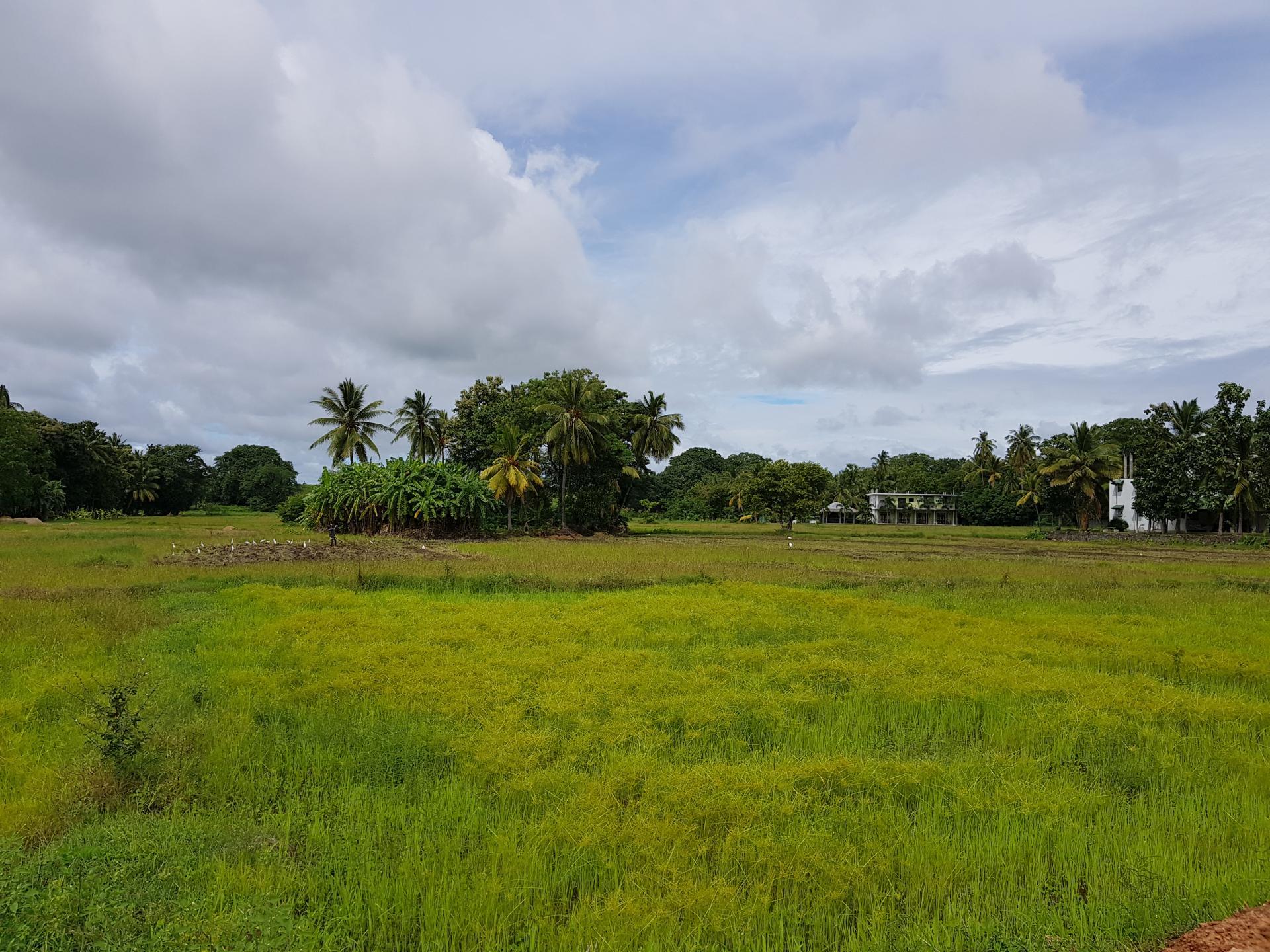 Крестьянин обрабатывает землю на Шри-Ланке.