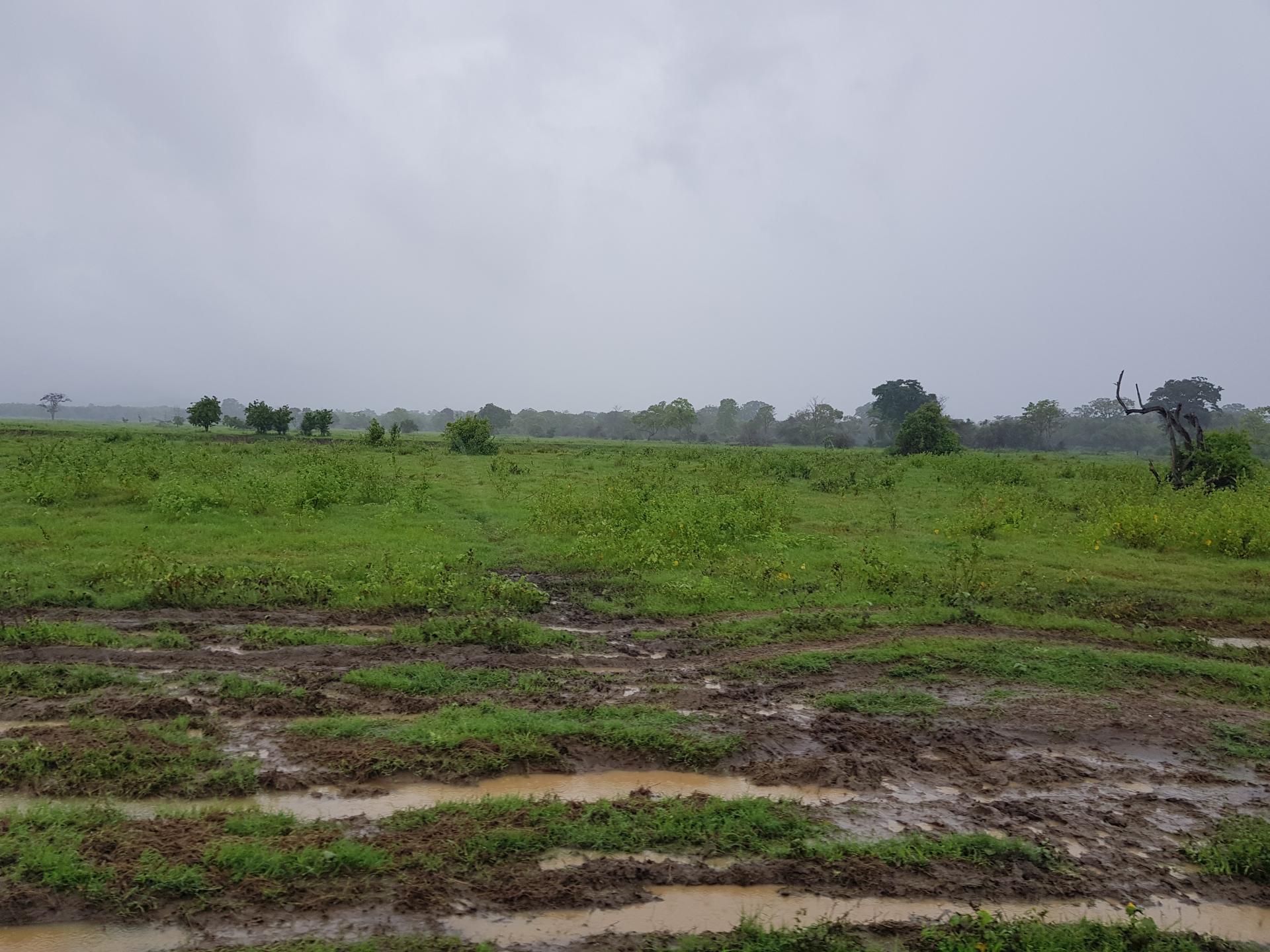 Грязь в Национальном парке Каудулла во время дождей.