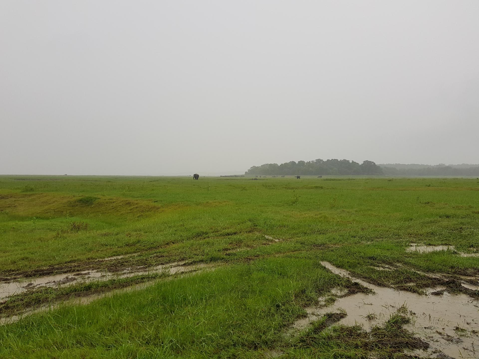 Национальный парк Каудулла, Шри-Ланка.