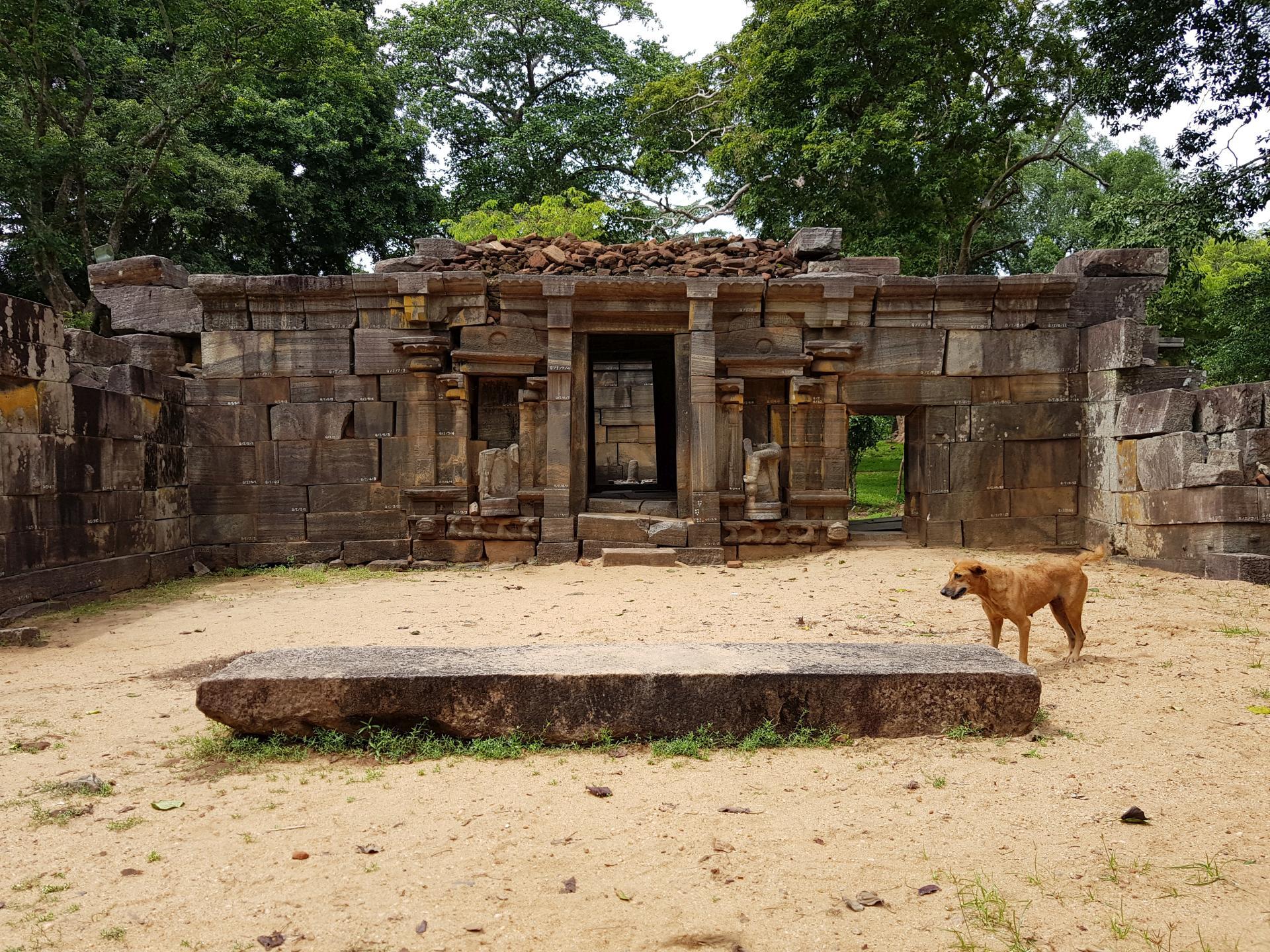 Собаки на Шри-Ланке.