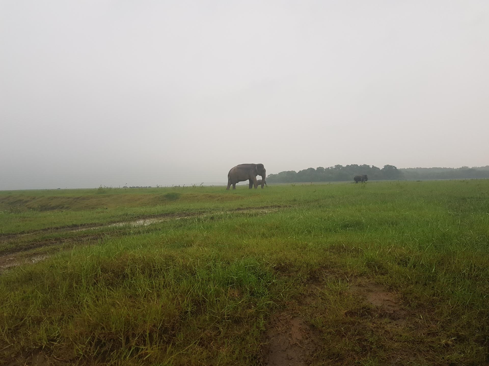 Слоны, Национальный парк Каудулла, Шри-Ланка.
