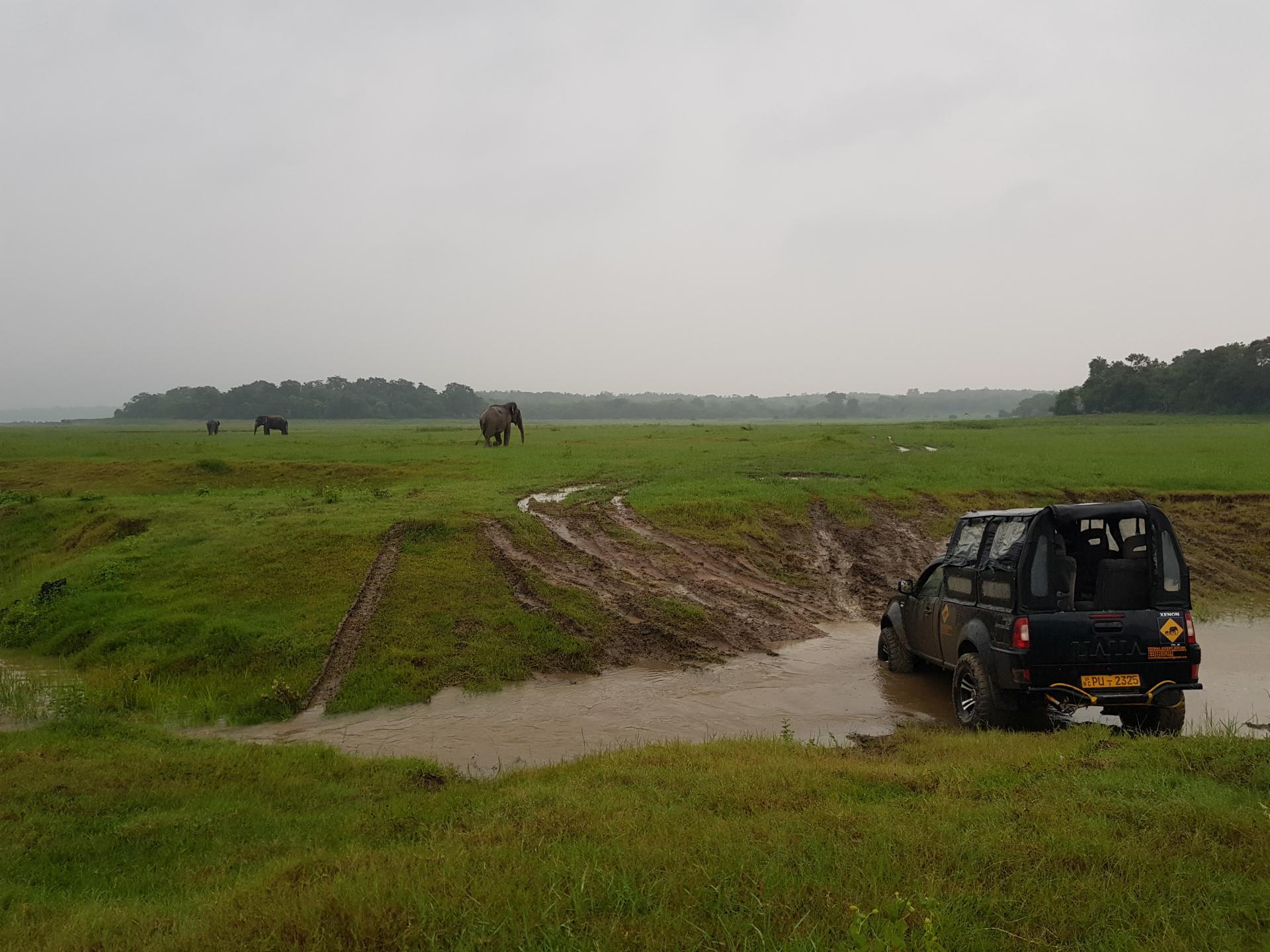Сафари на джипах, Национальный парк Каудулла, Шри-Ланка.