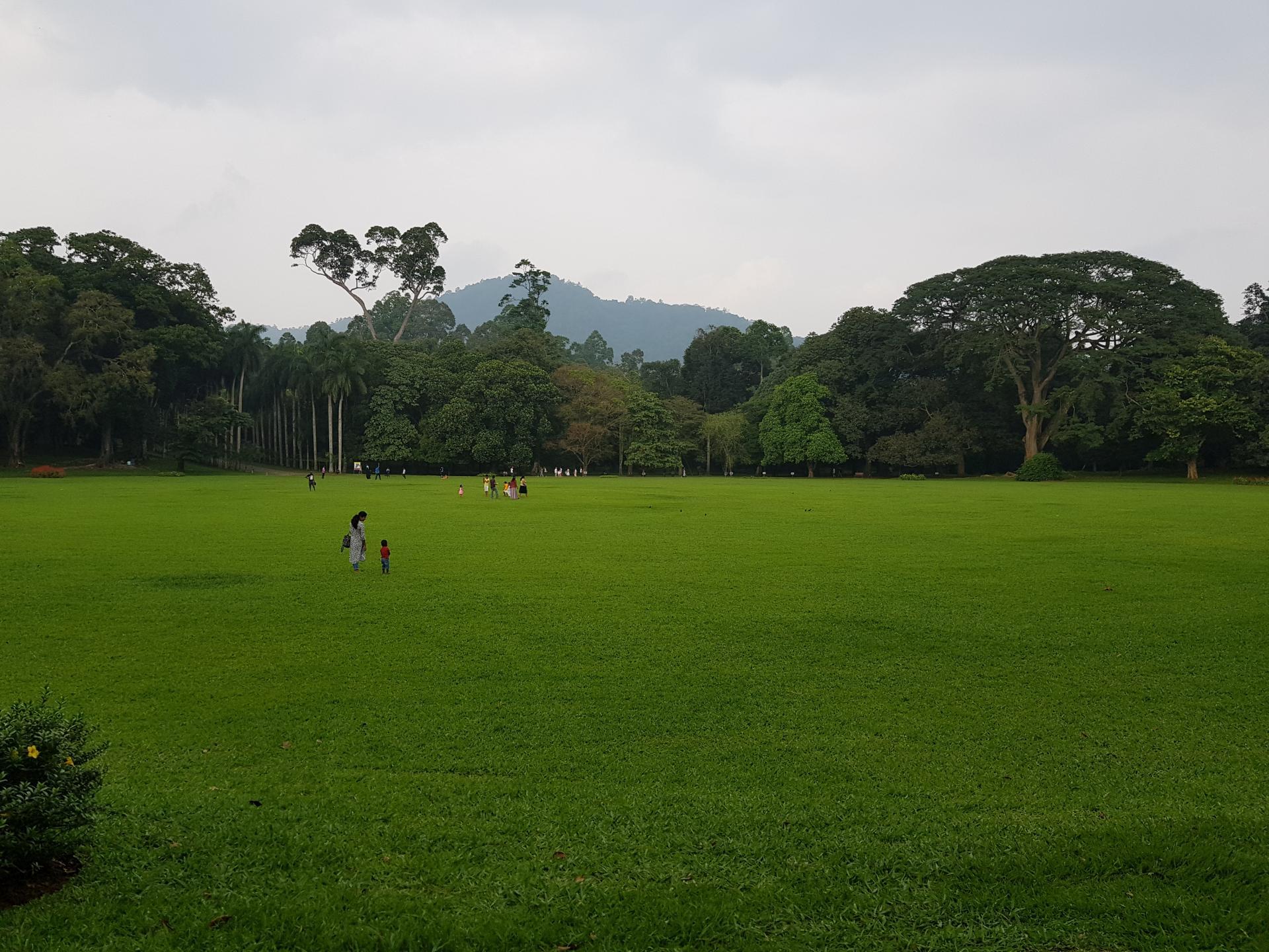 Большой круг в Ботаническом саду Канди, Шри-Ланка.