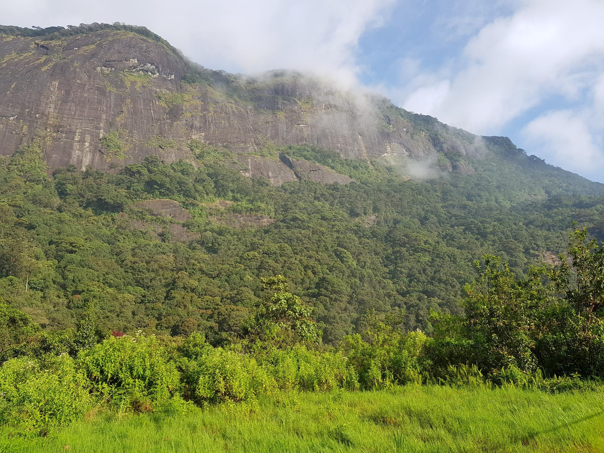 Природа в горах. Далхаузи, Шри-Ланка.