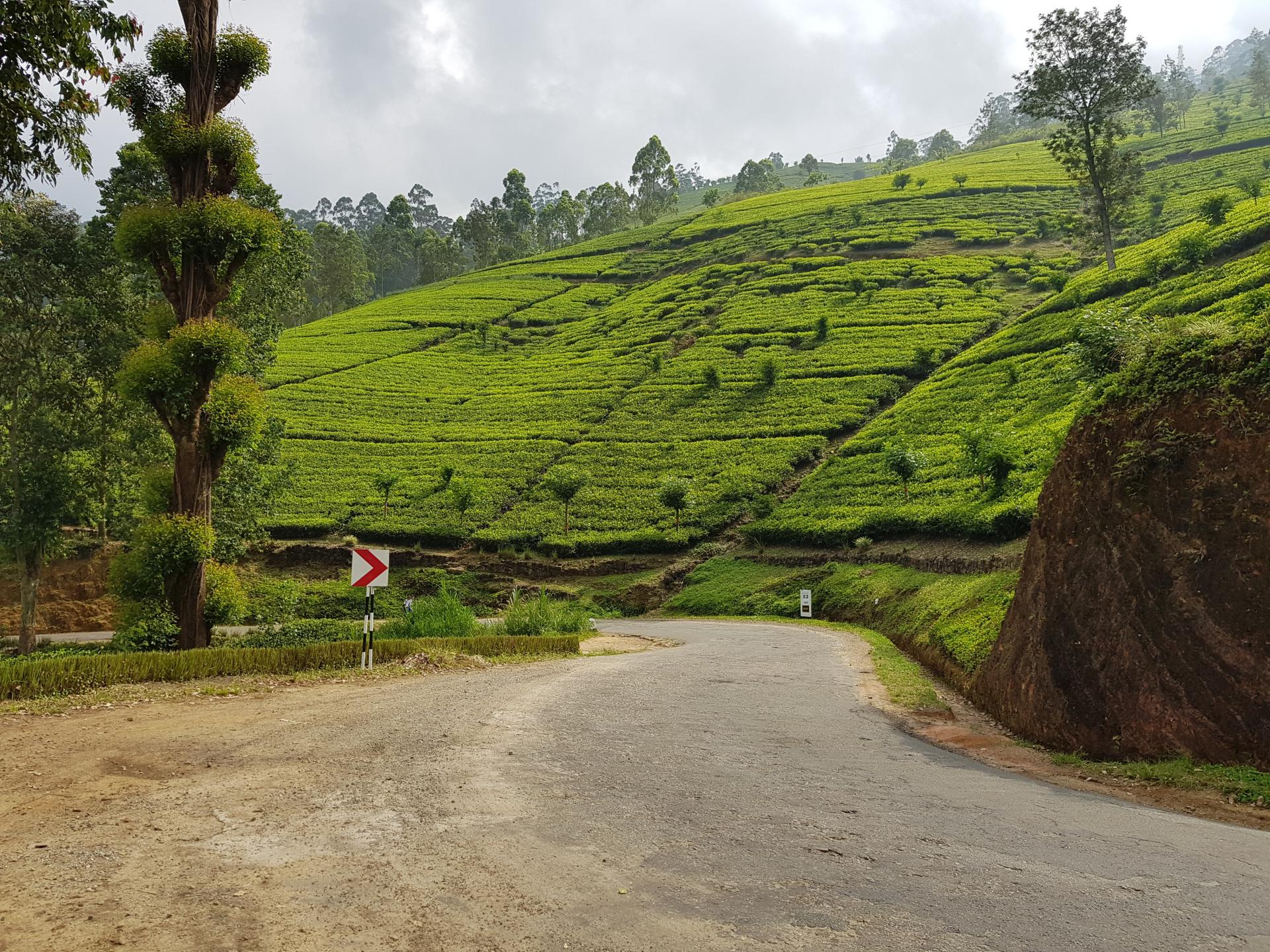 чайные плантации, Шри-Ланка