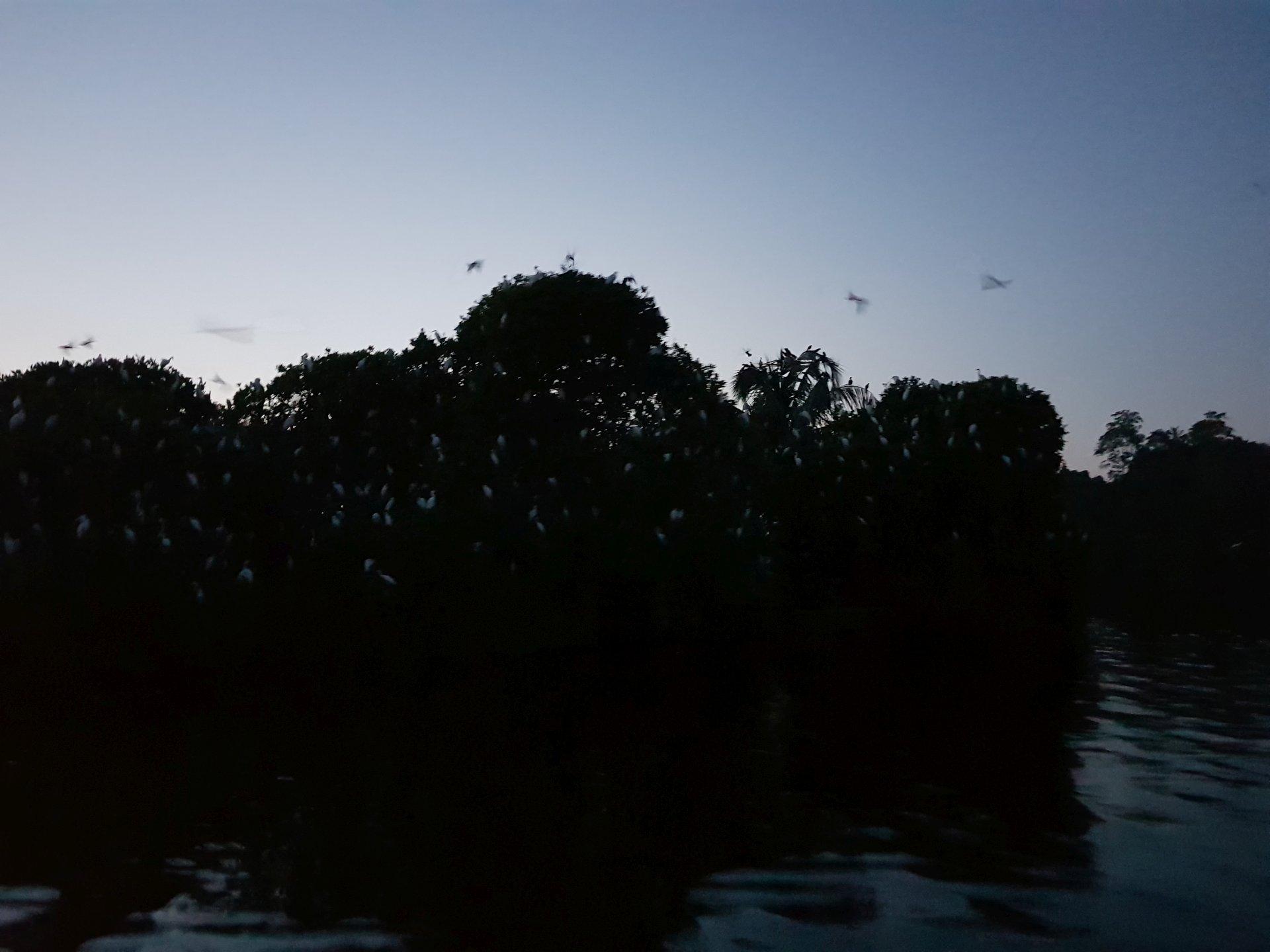 остров чаек, Хиккадува, Шри-Ланка