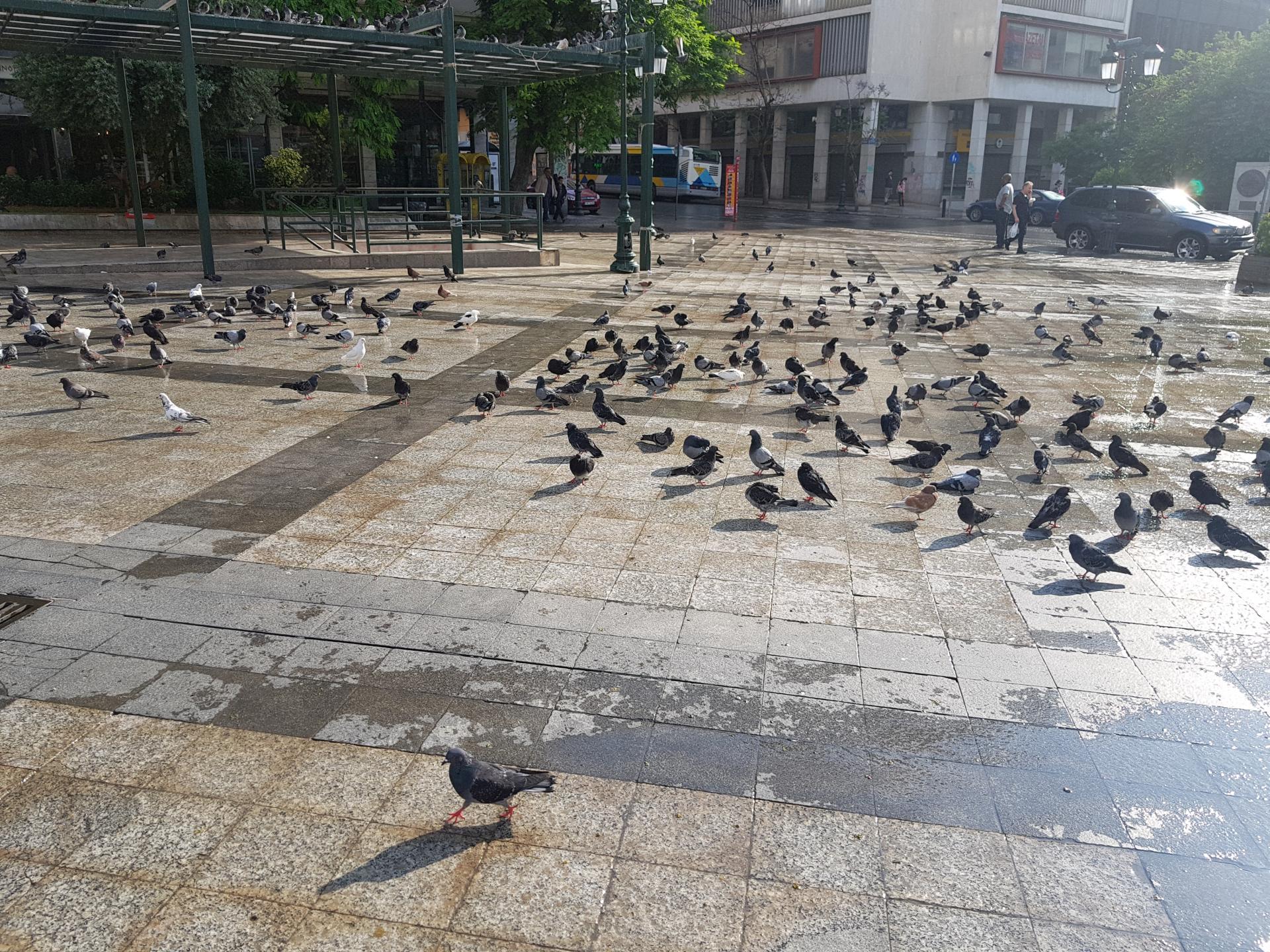 голуби на площади в Афинах