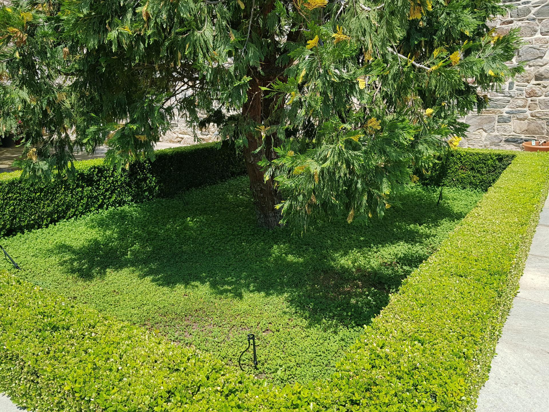 газоны и подстриженные кусты на Афоне