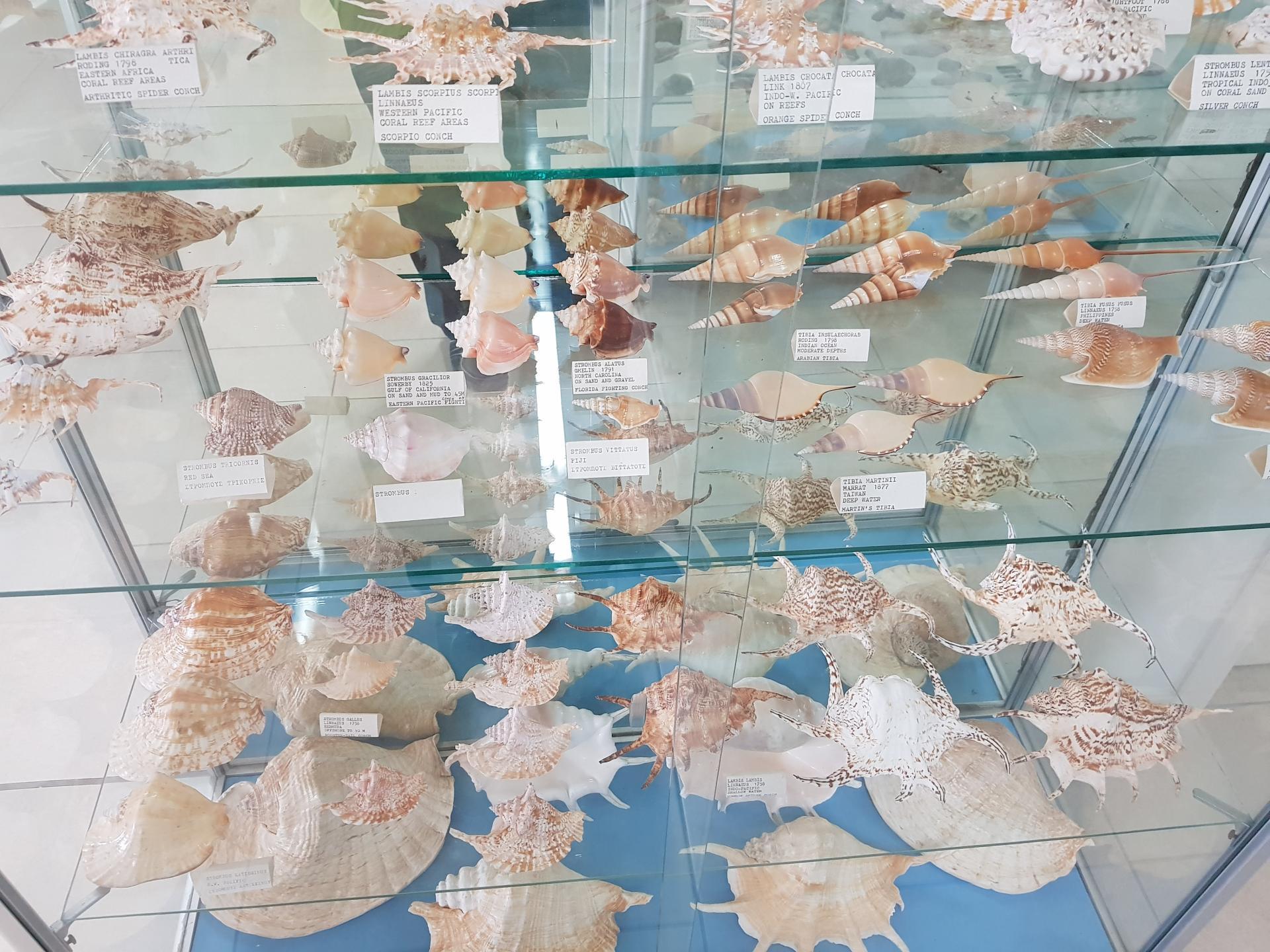 ракушки, музей ракушек, Бенитсес