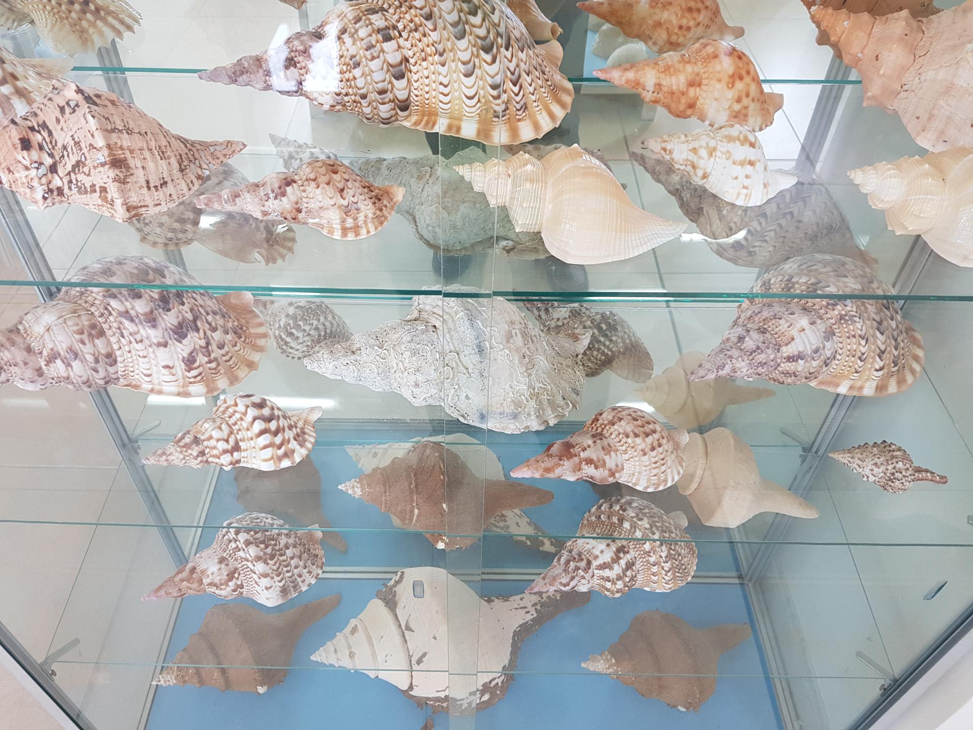 ракушки в музее ракушек, Бенитсес