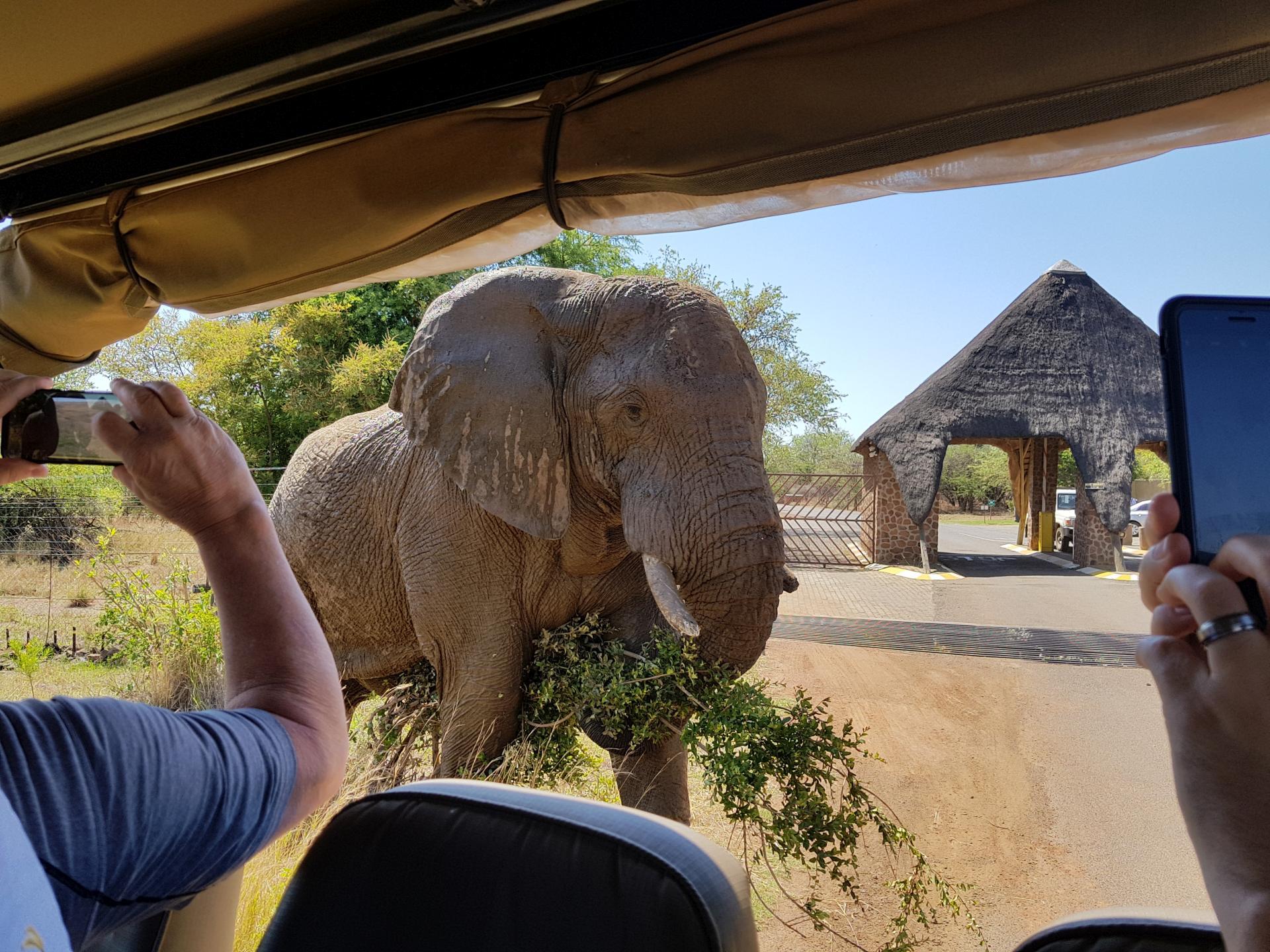 слон в парке Пиланесберг