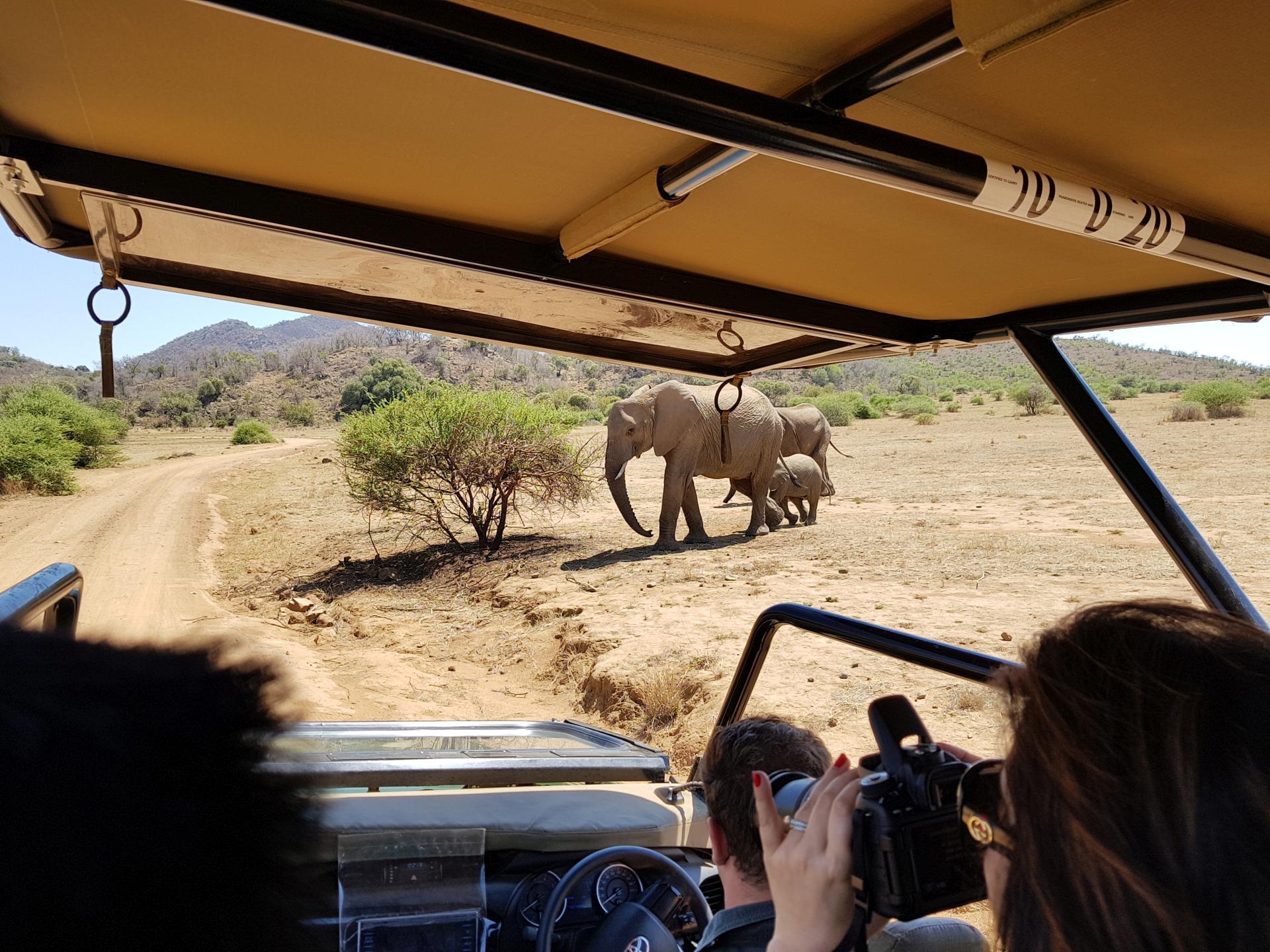 слониха со слоненком в парке Пиланесберг