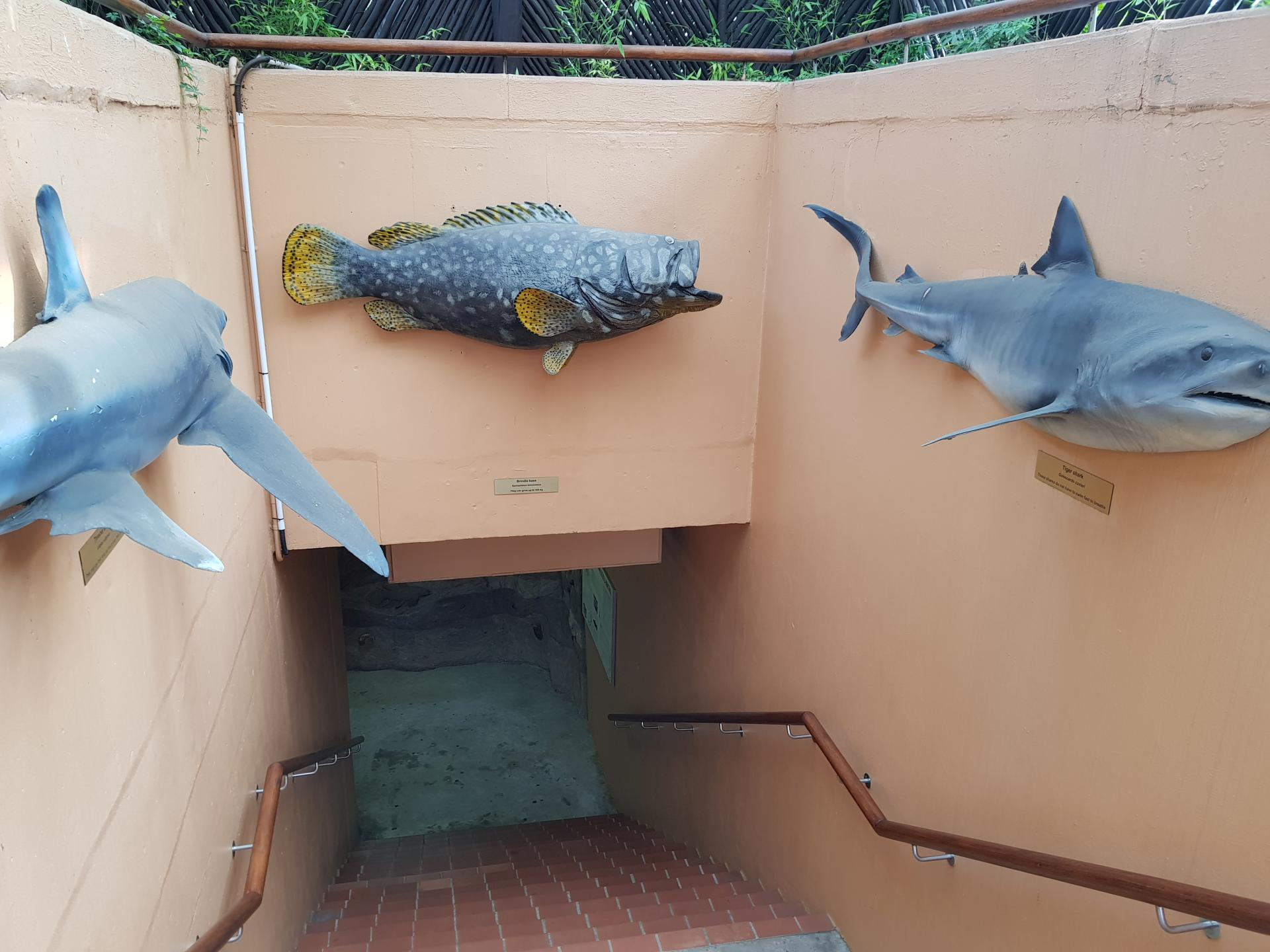 оформление Ushaka Marine World