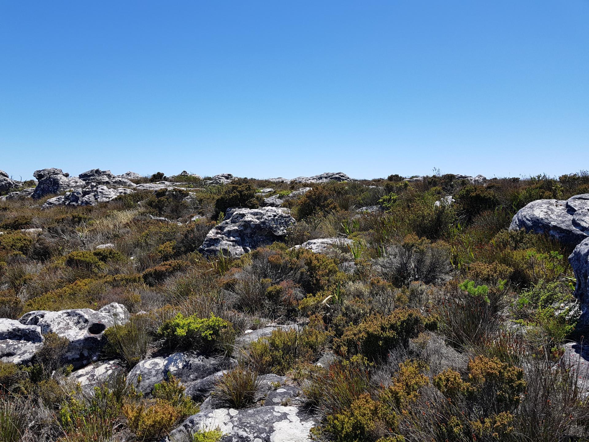 растительность на вершине Столовой горы