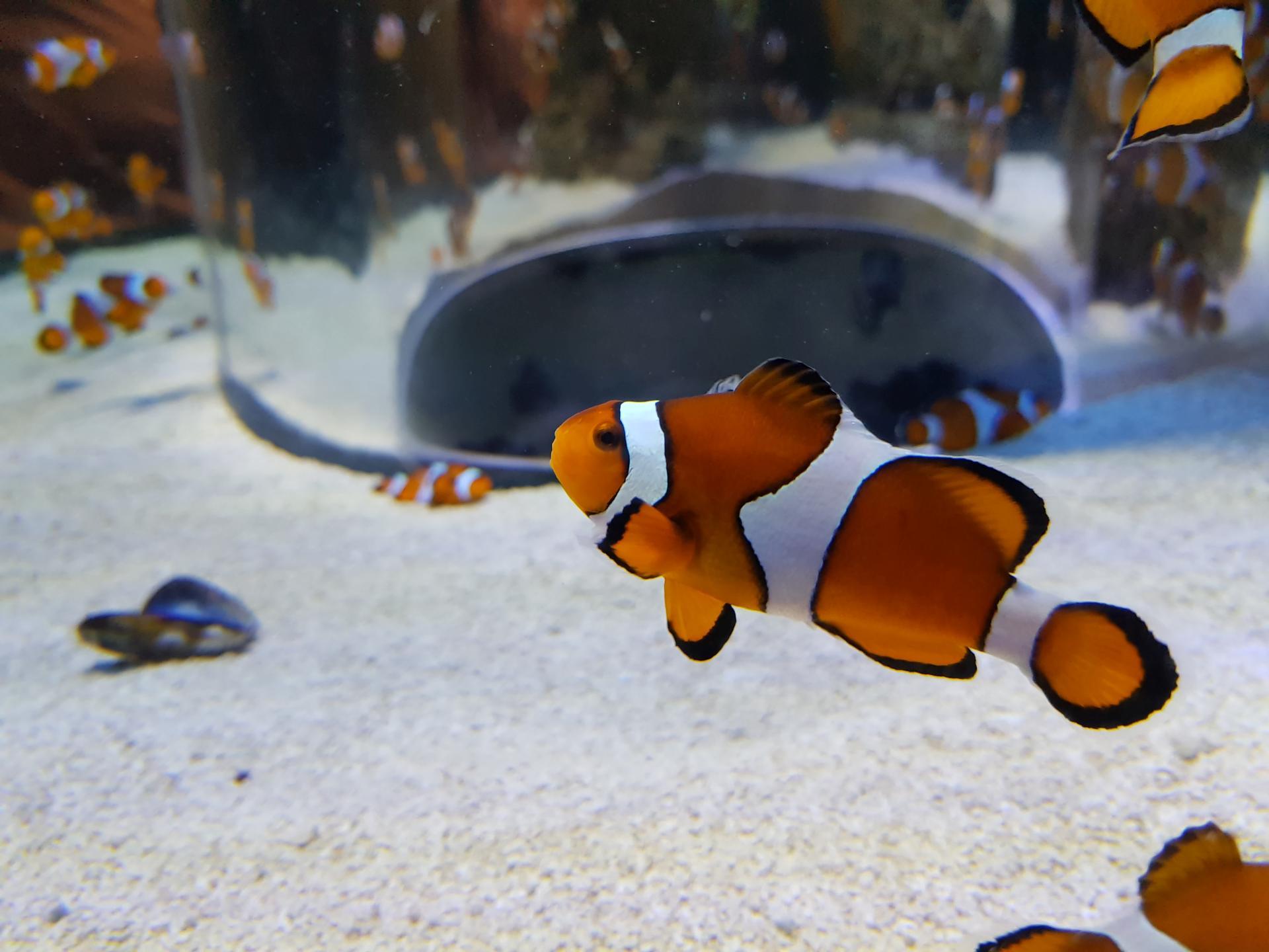 рыбы в океанариуме Кейптауна