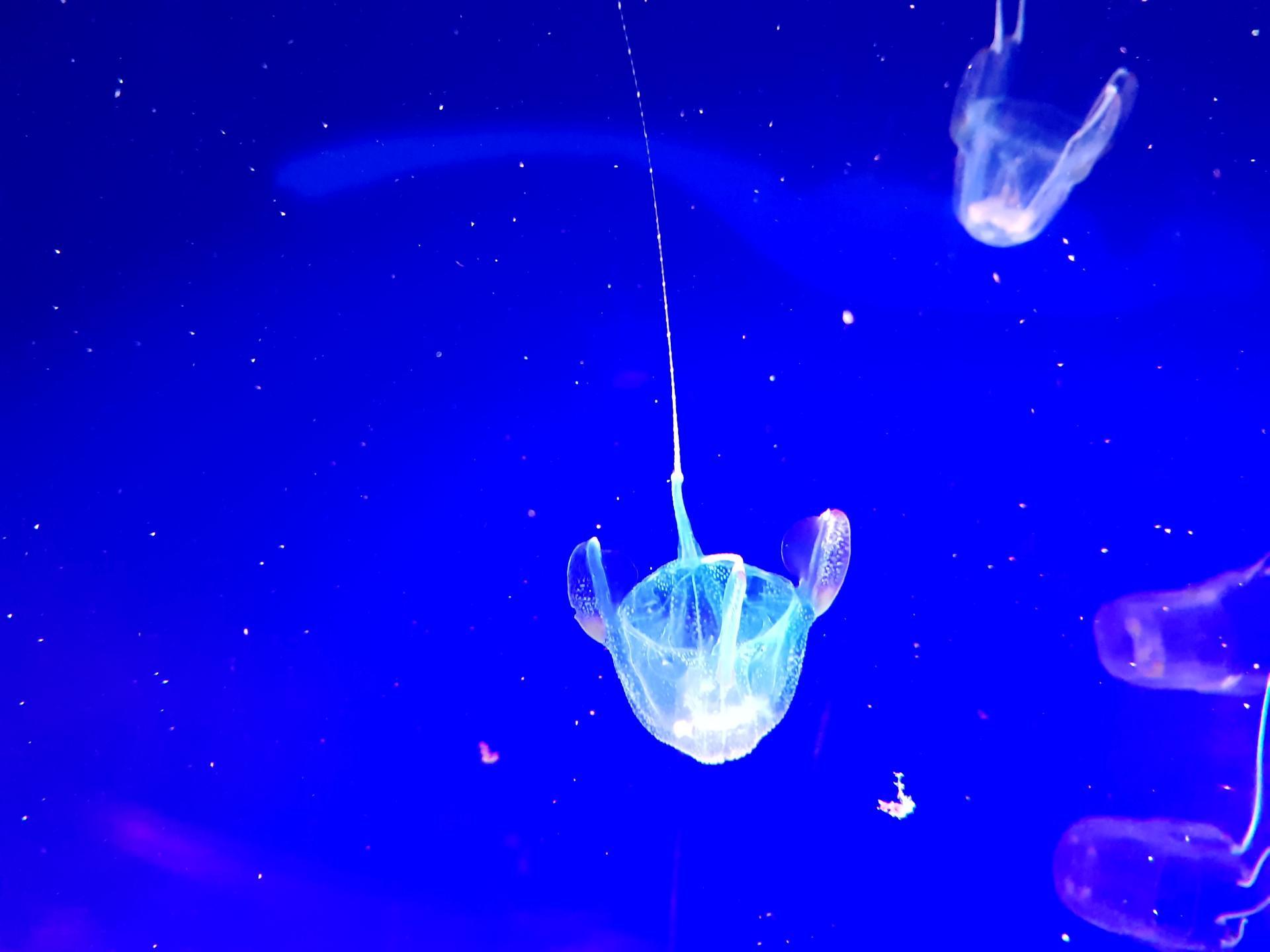медузы в океанариуме