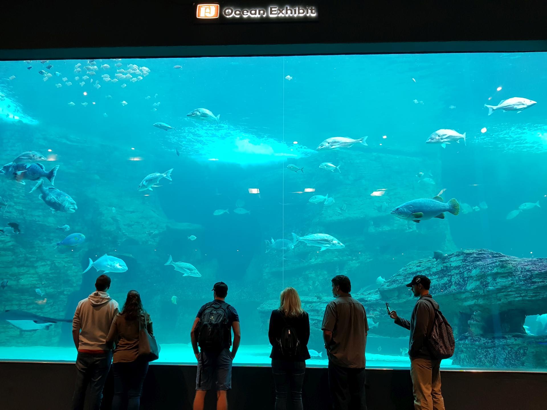 аквариум в океанариуме Кейптауна