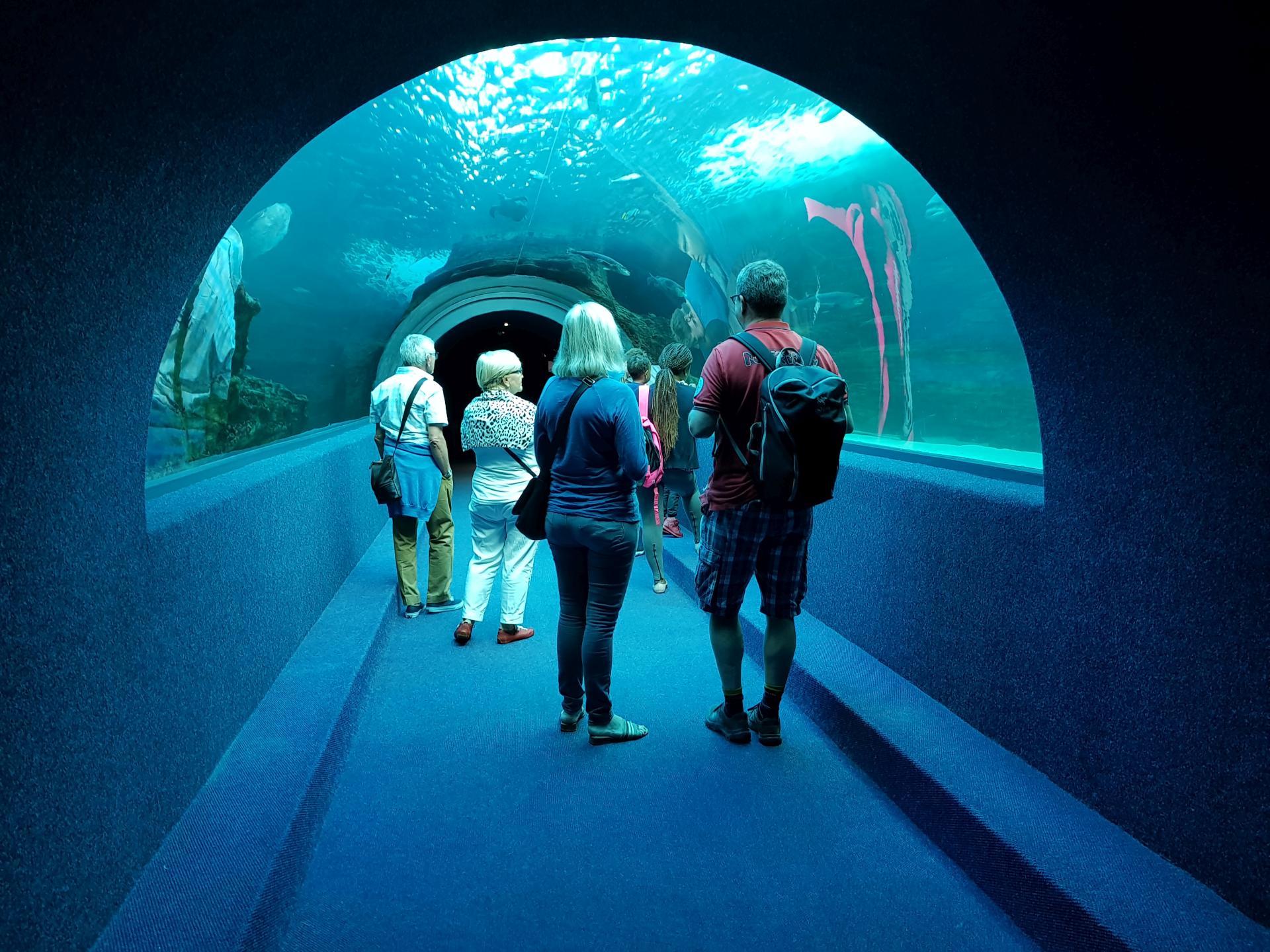 прозрачный тоннель в аквариуме