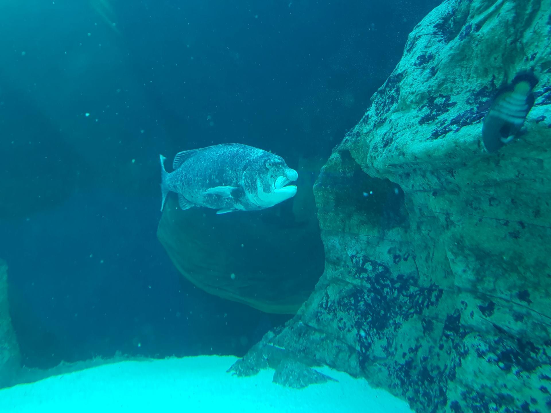 рыба в аквариуме, Кейптаун