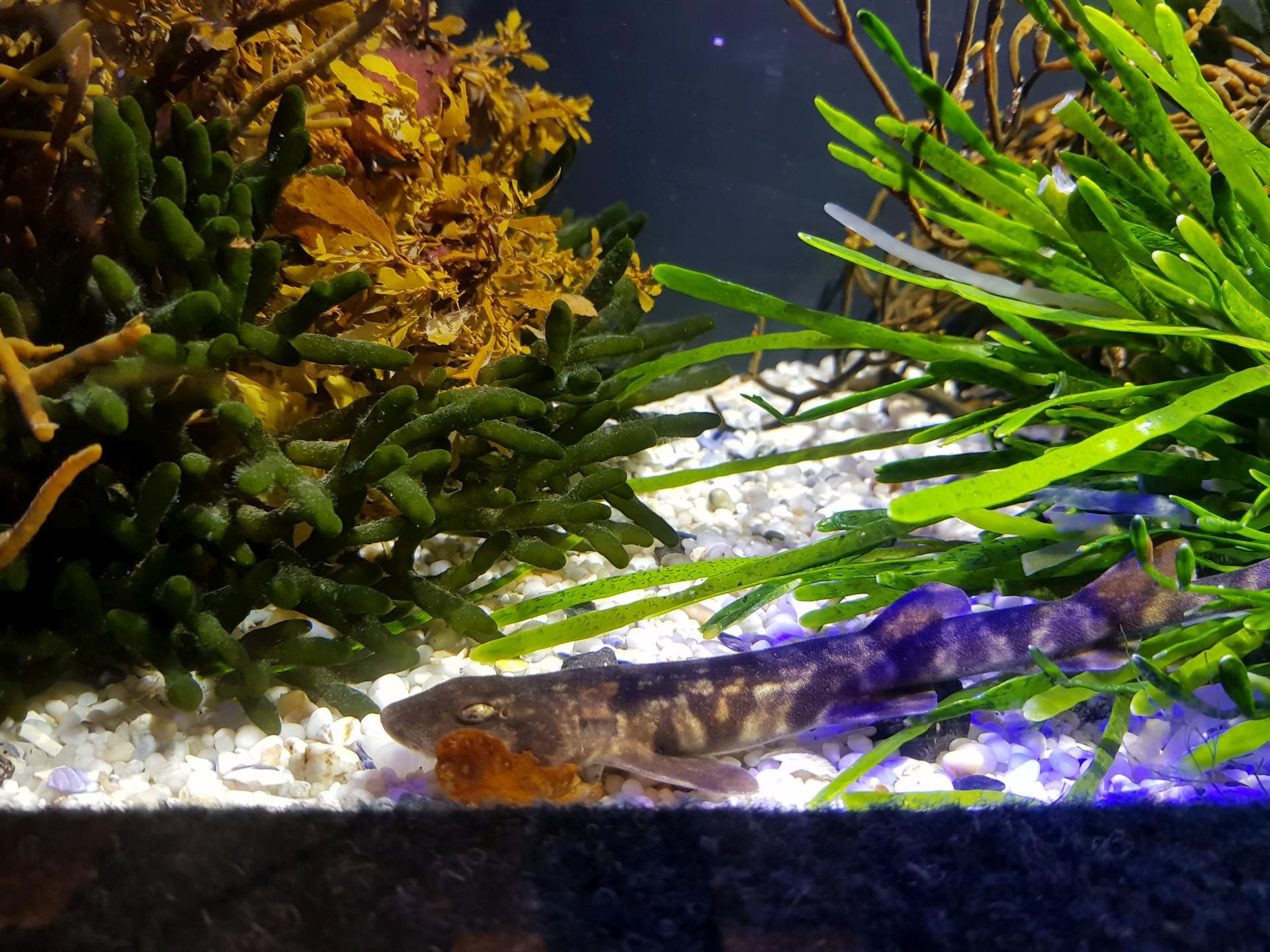 рыбы в аквариуме, Кейптаун