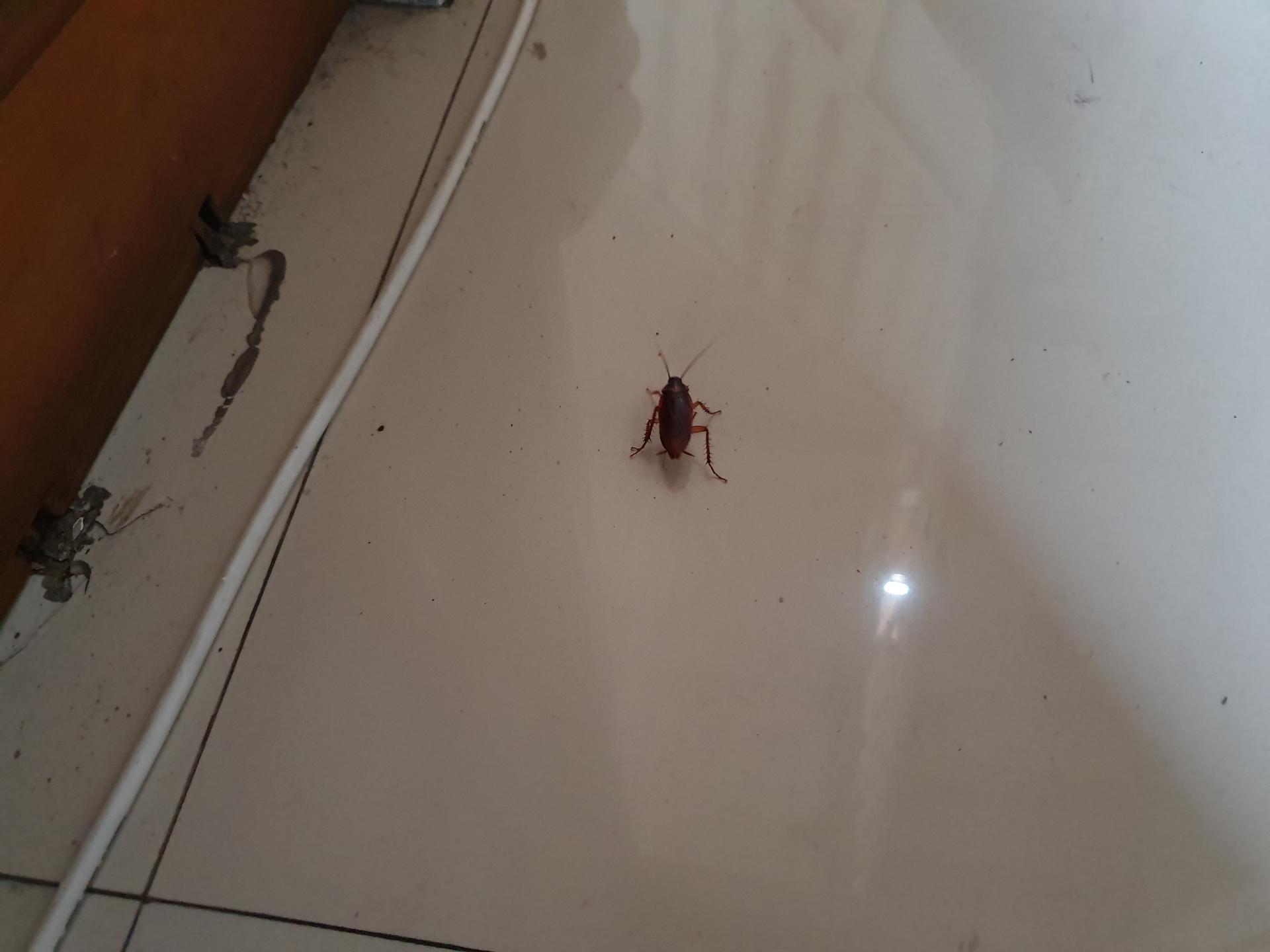 таракан в гостинице в Индонезии