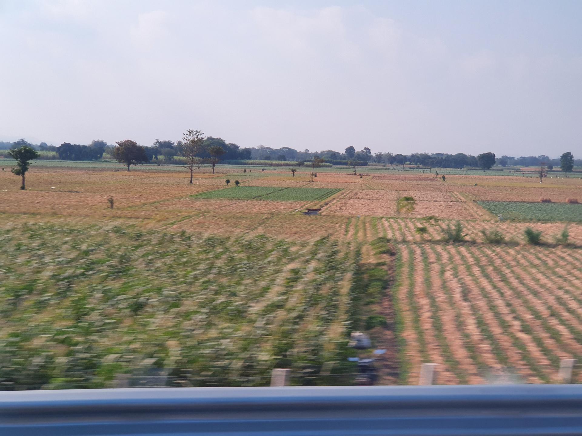 поля в Индонезии