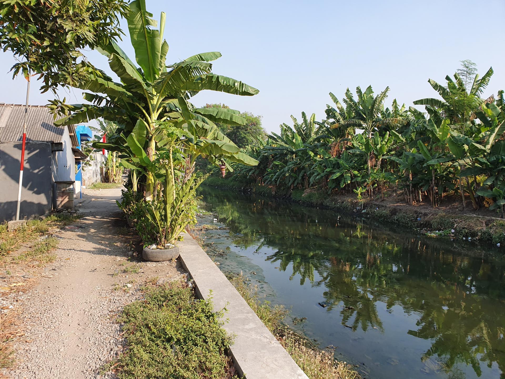 река в городе Сурабайя