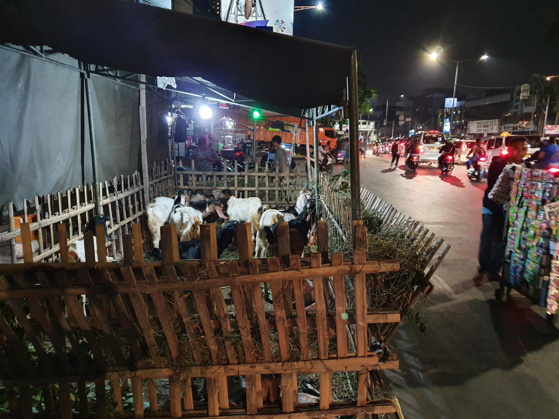 козы в столице Индонезии Джакарте