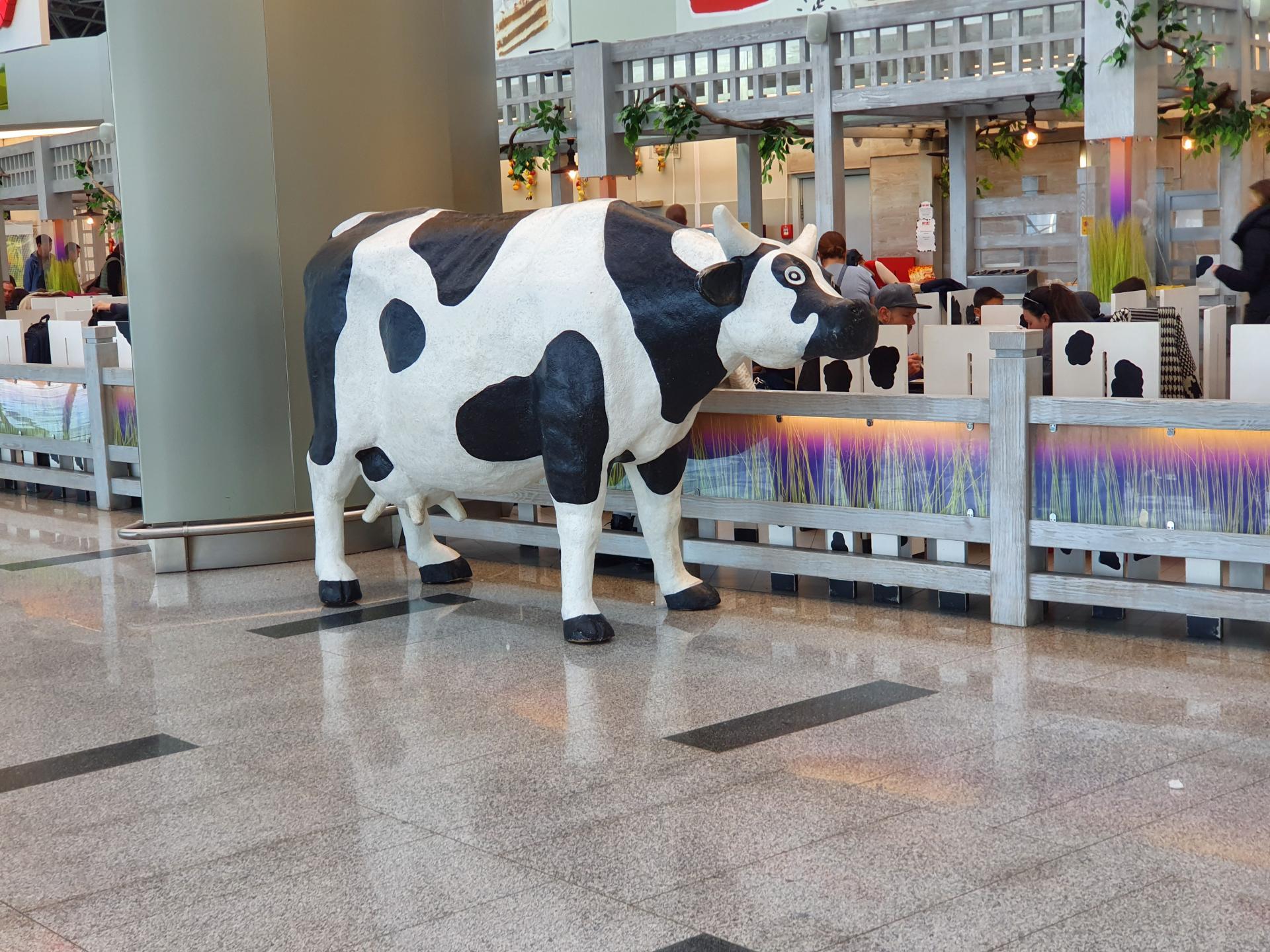корова в кафе во Внуково