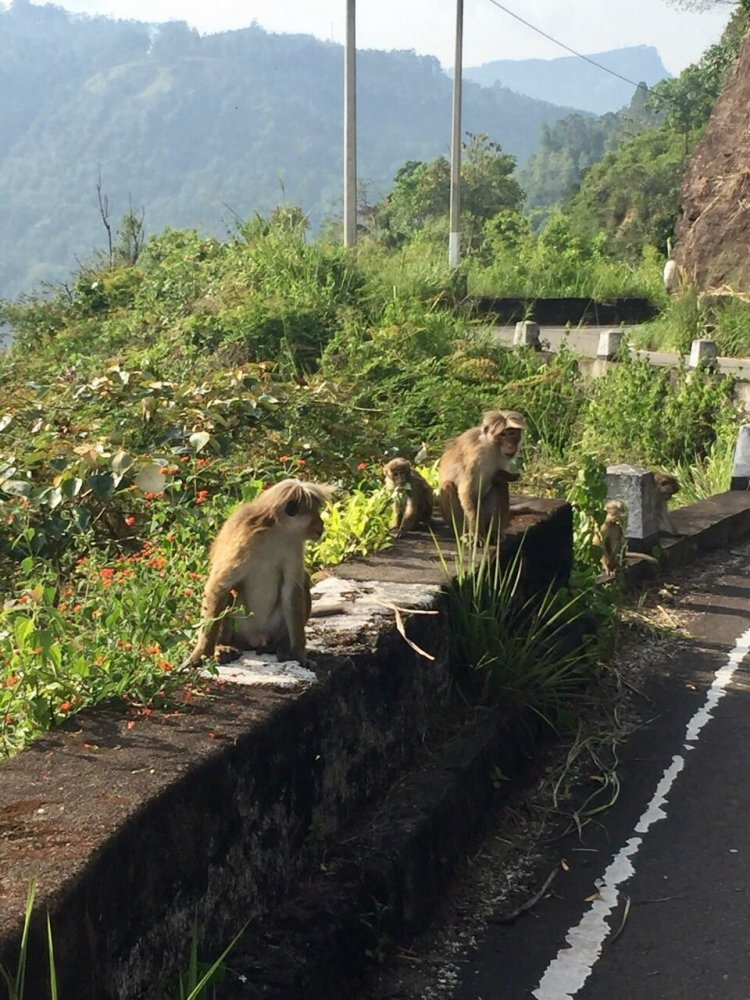 мартышки на дороге