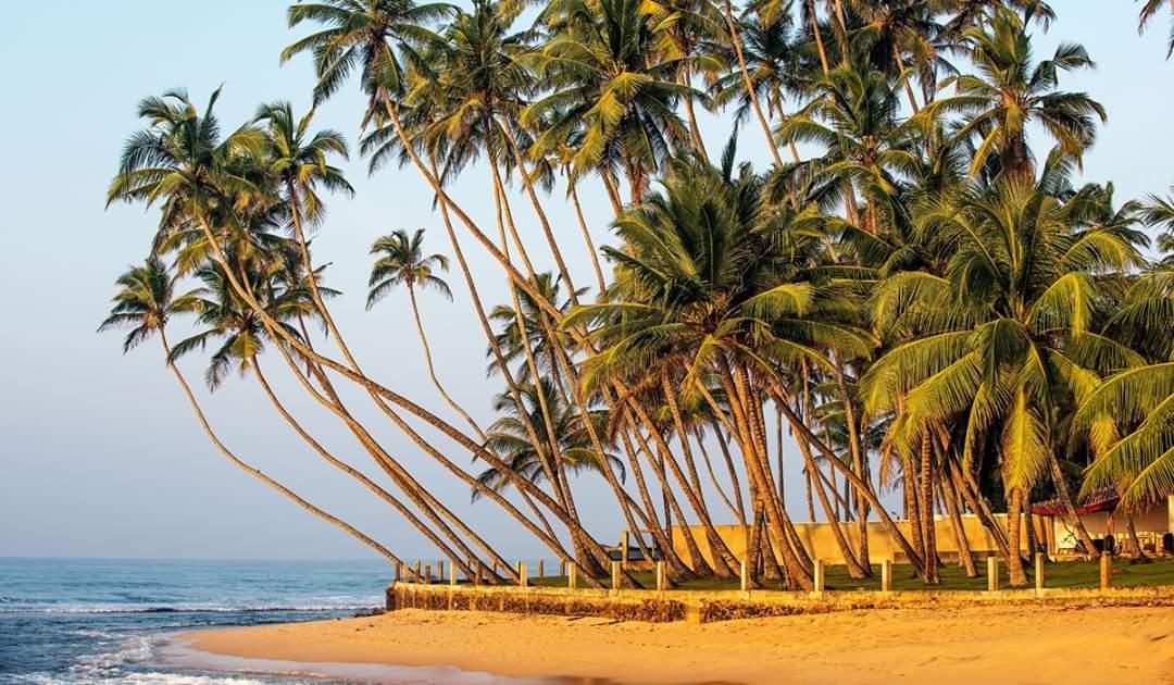 пляж с пальмами на Шри-Ланке