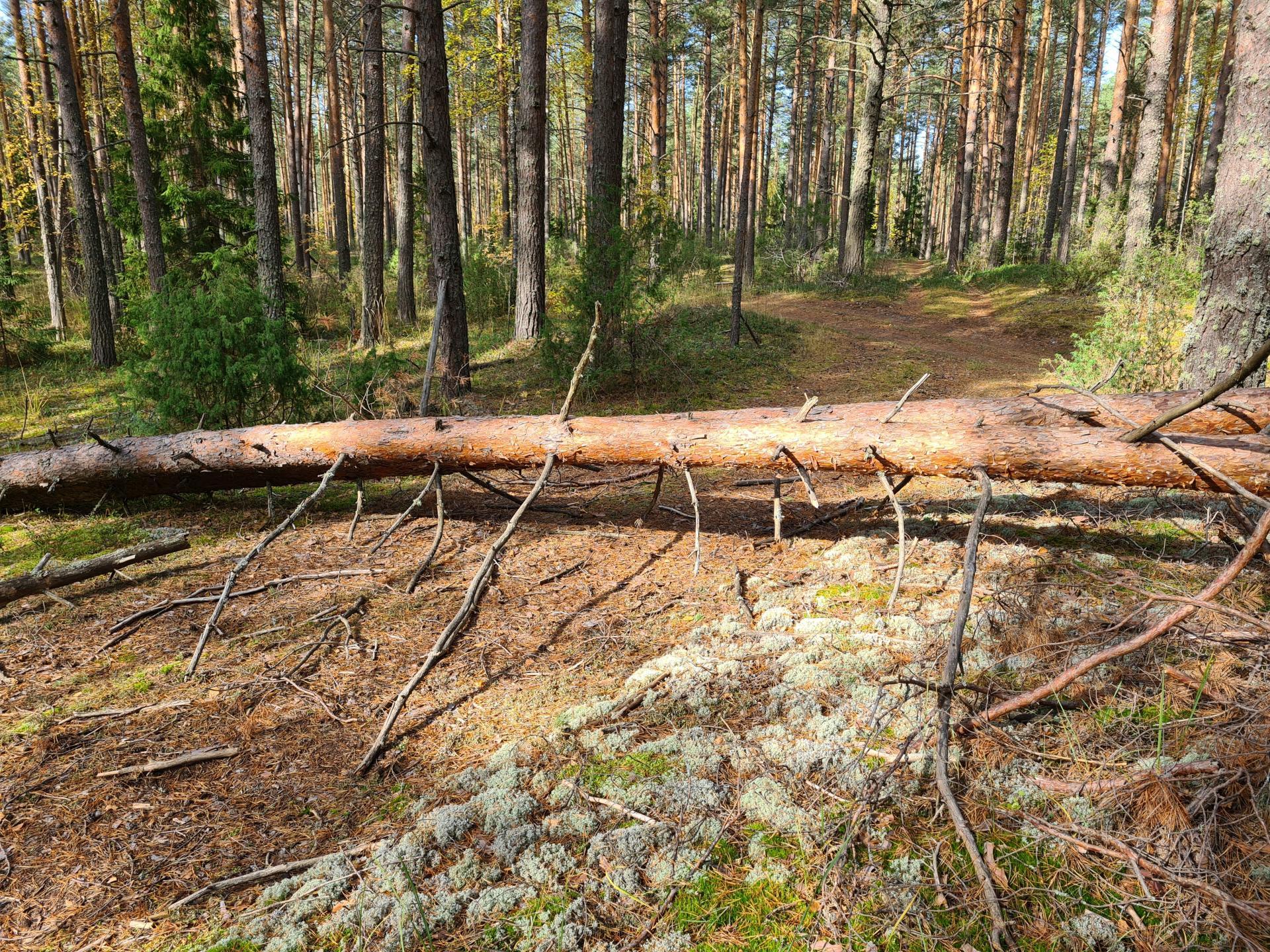 дерево перегородило дорогу