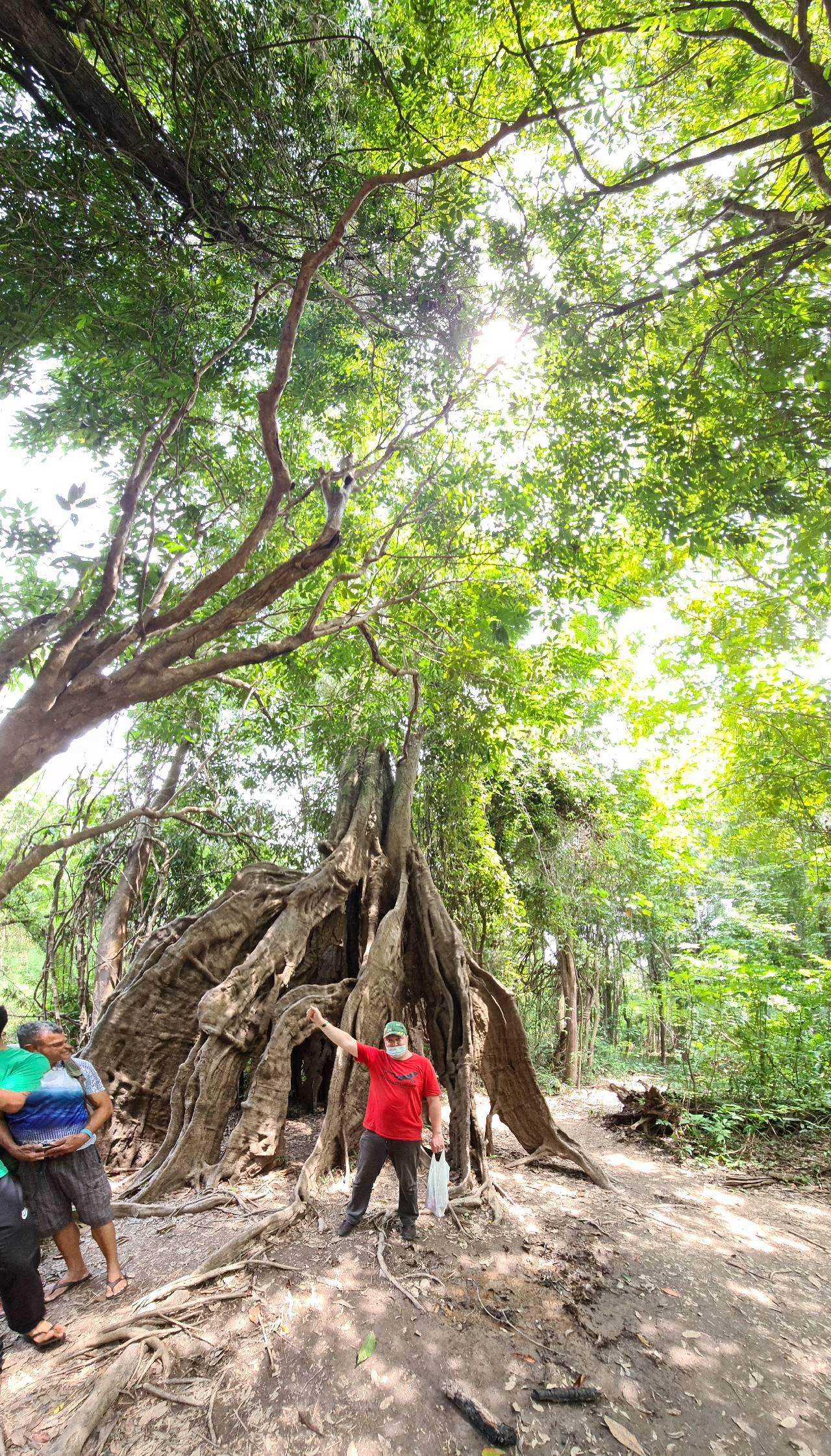 Вятский Лапоть у дерева в Бразилии