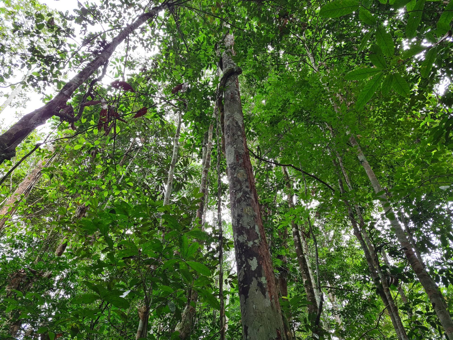джунгли в Бразилии