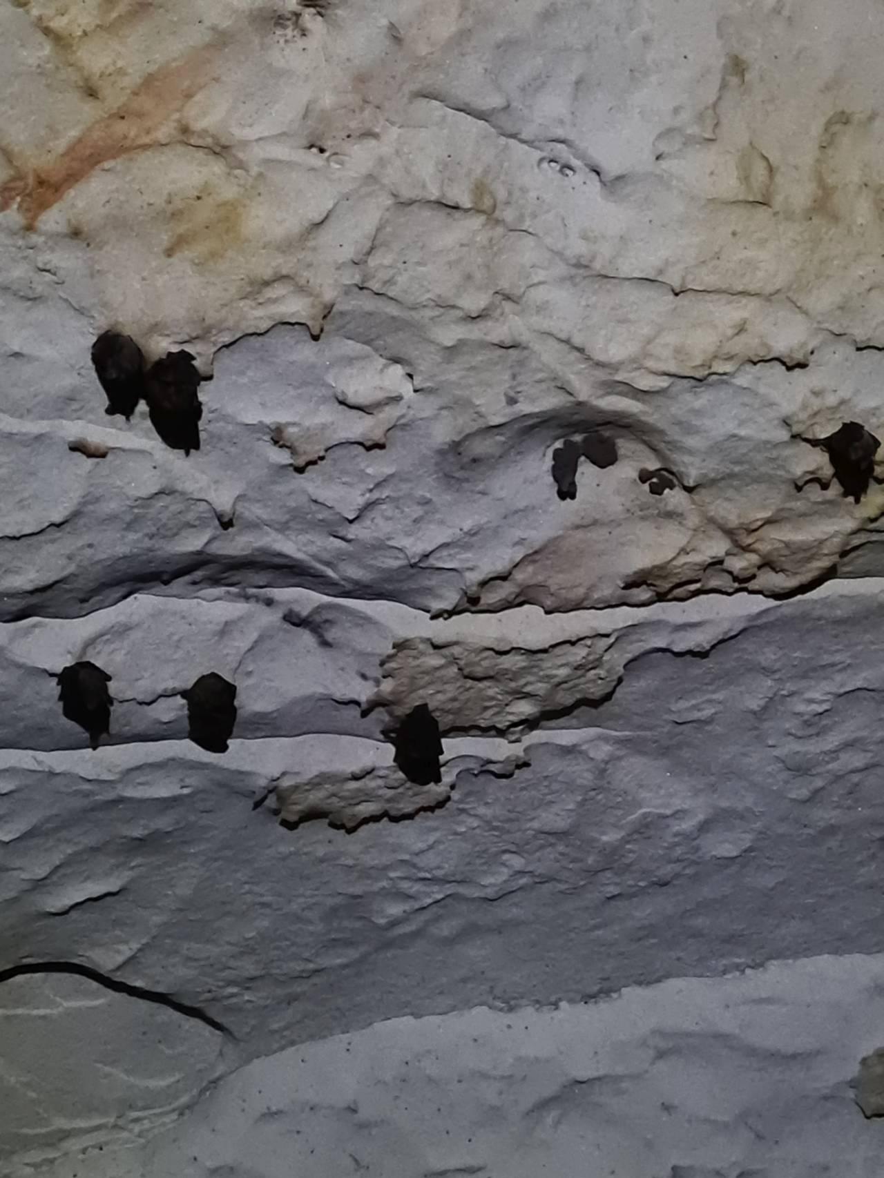 летучие мыши в пещере Мароага