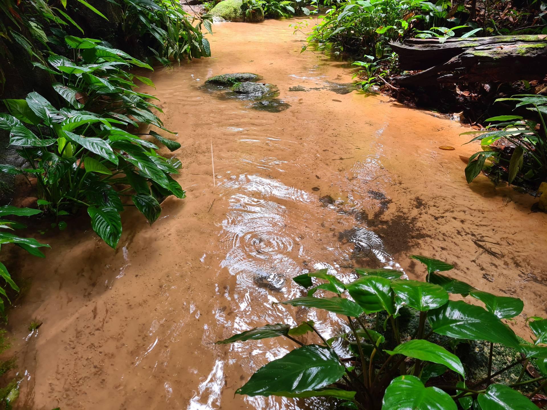 лесной ручей в джунглях Бразилии