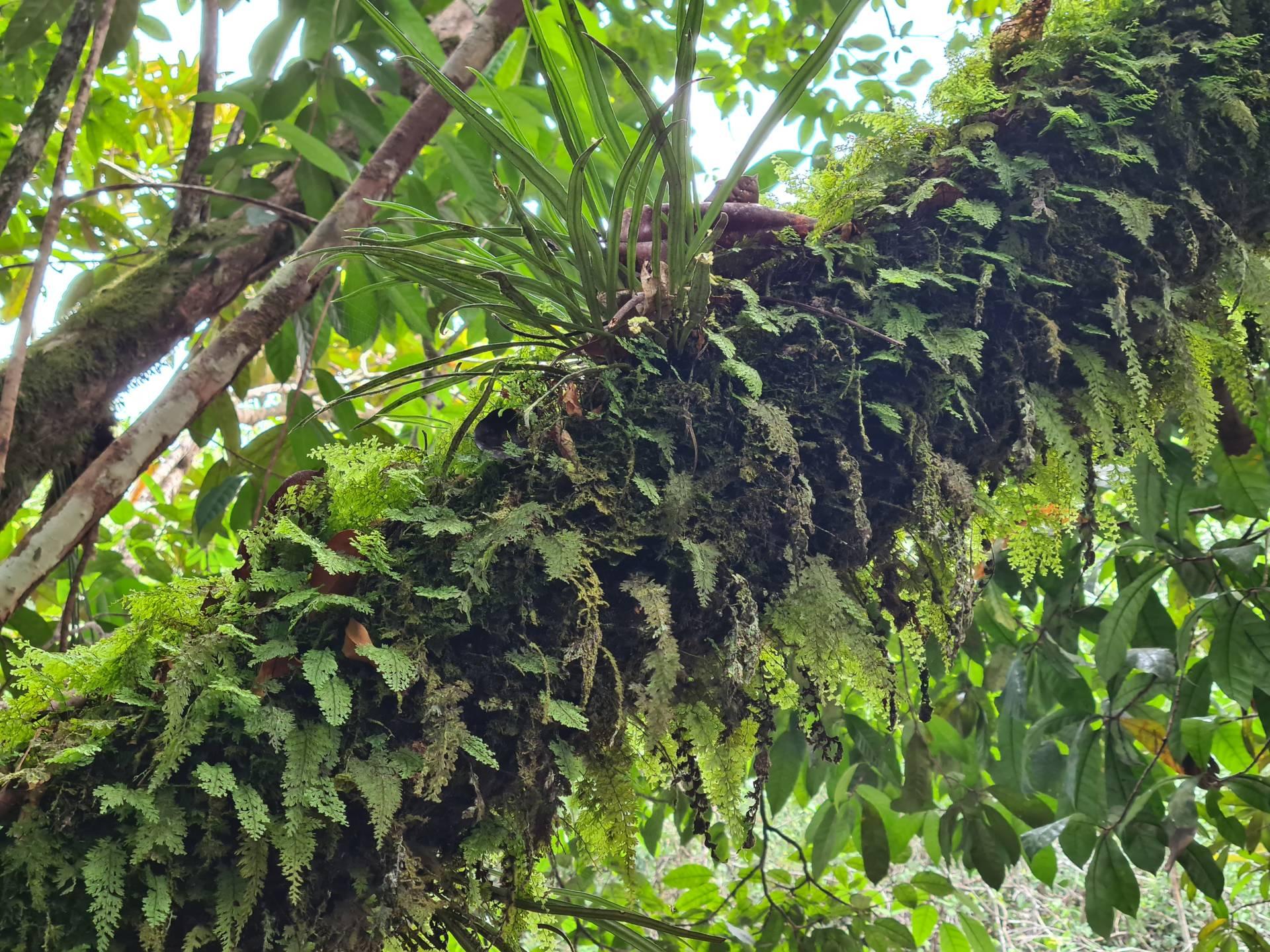 ствол дерева, обросший папоротником