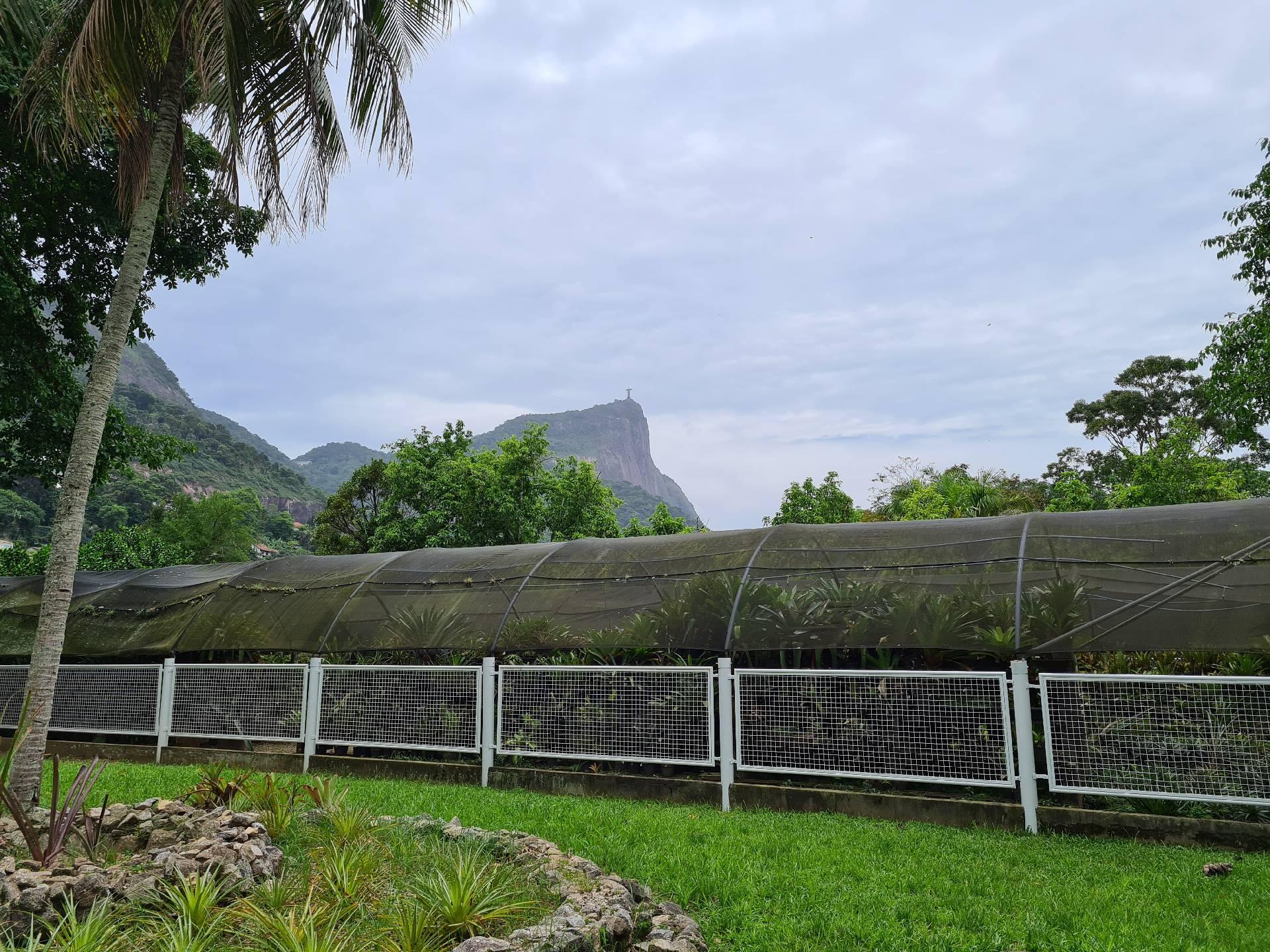 вид на гору Корковадо из ботанического сада Рио
