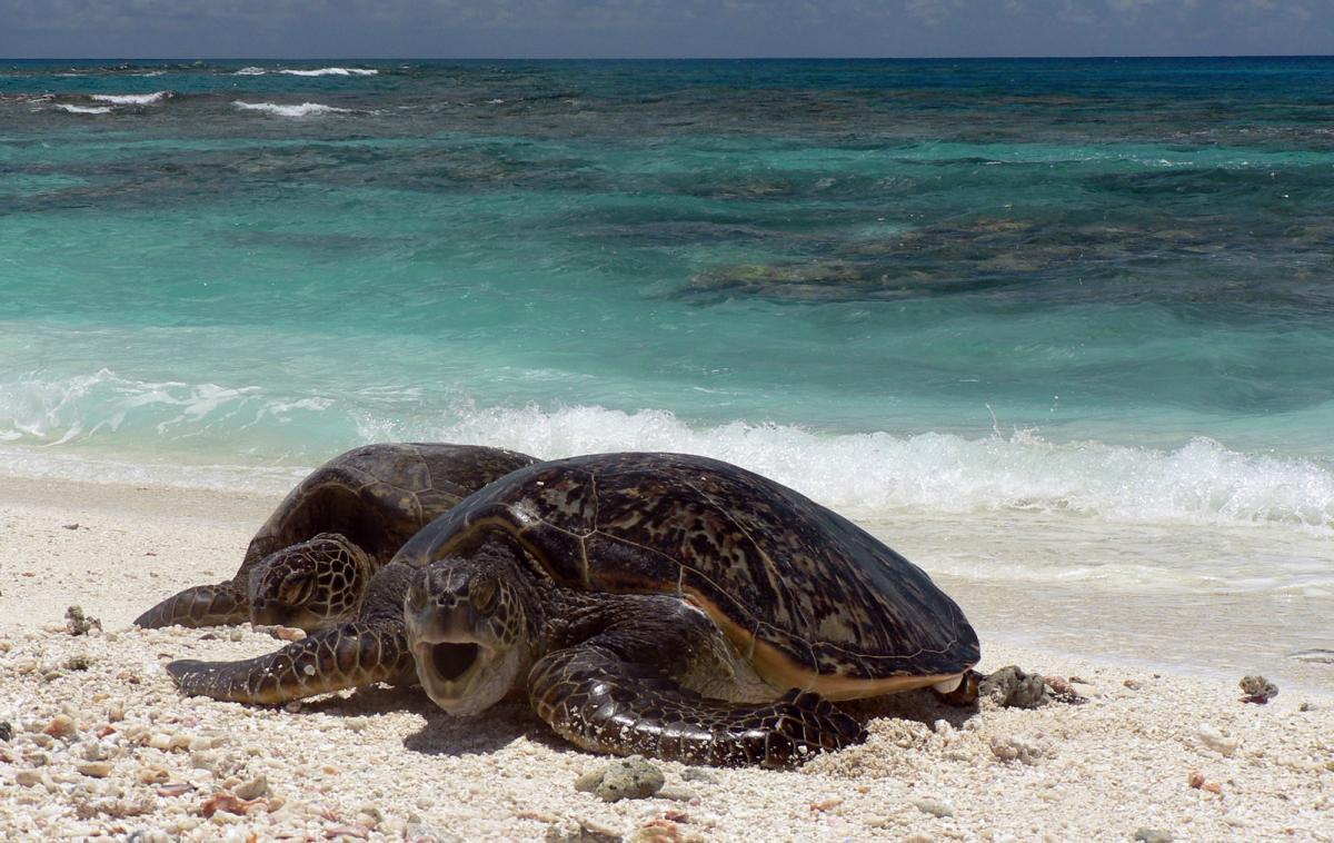зеленая черепаха на берегу