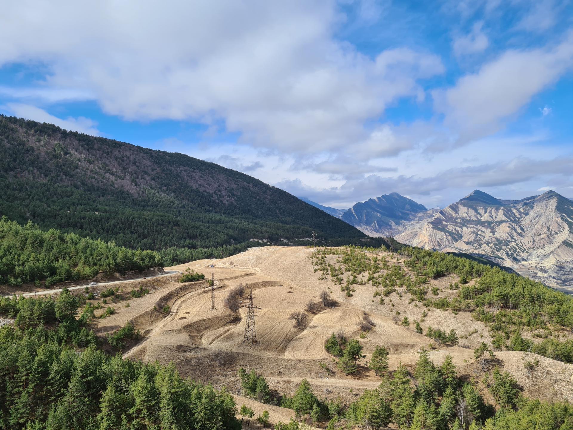 хвойный лес на горах в Дагестане